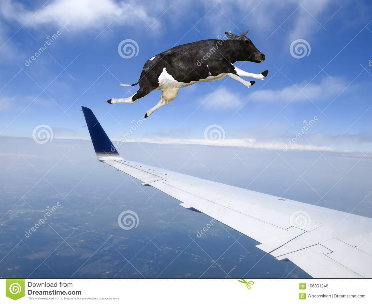 Funny Flying Cow Plane Travel Stock Photo Image Of Funny Flying