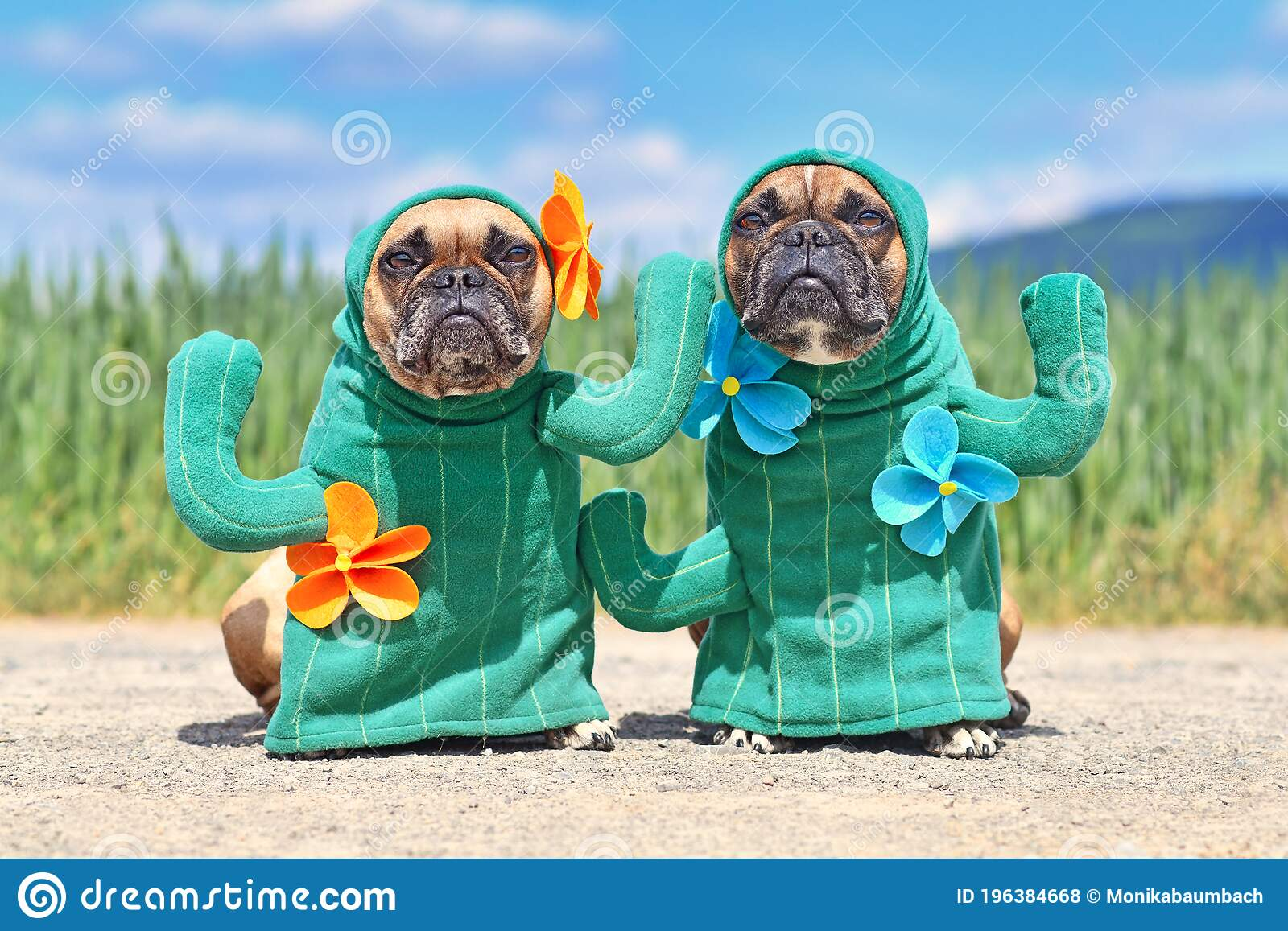 Funny French Bulldog Dogs Dressed Up With Funny Cactus Plant Halloween Dog Costumes With Fake Arms And Flowers Stock Photo Image Of Frenchie Handmade 196384668