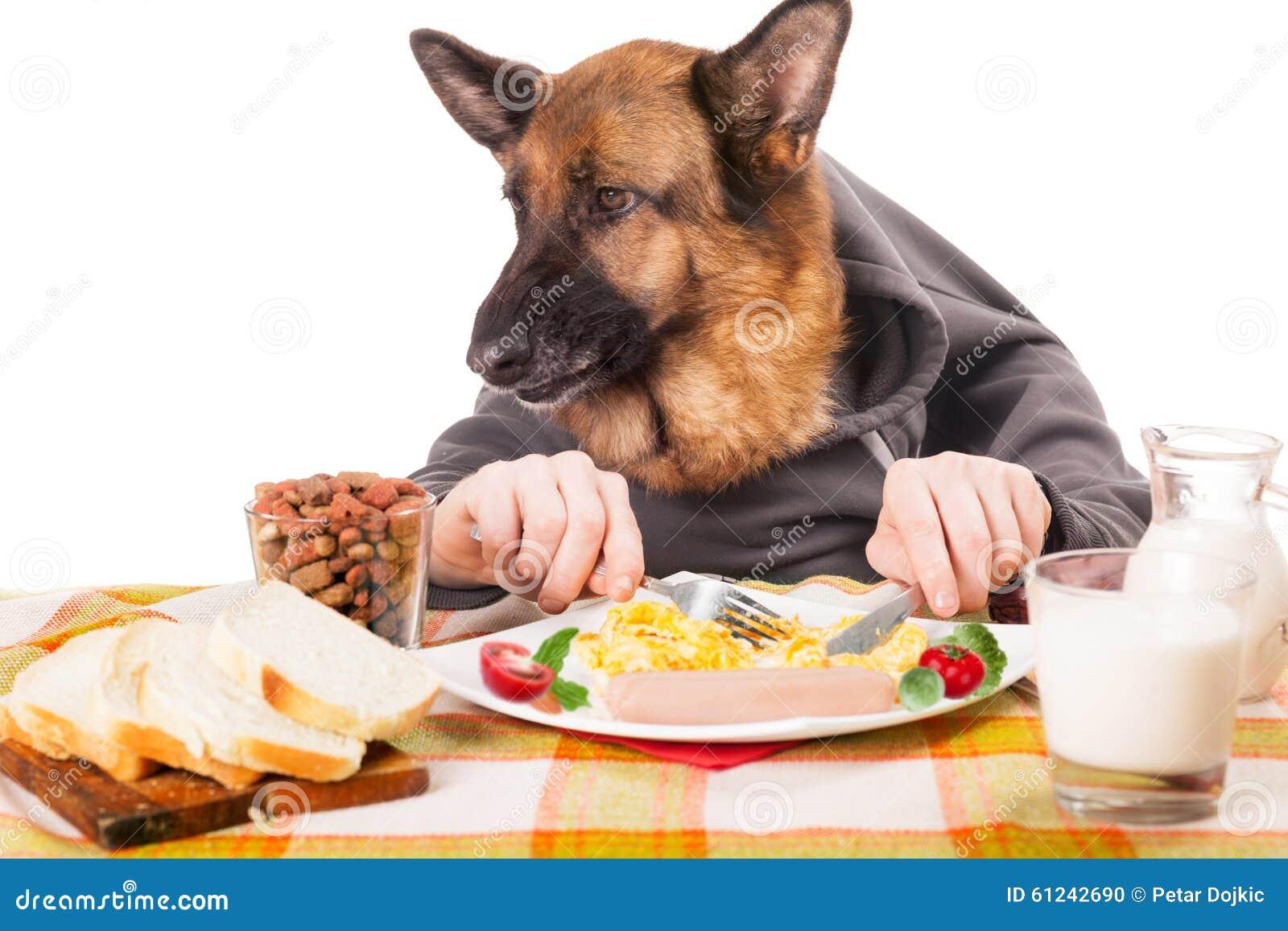 Dog Eating Food Human Hands