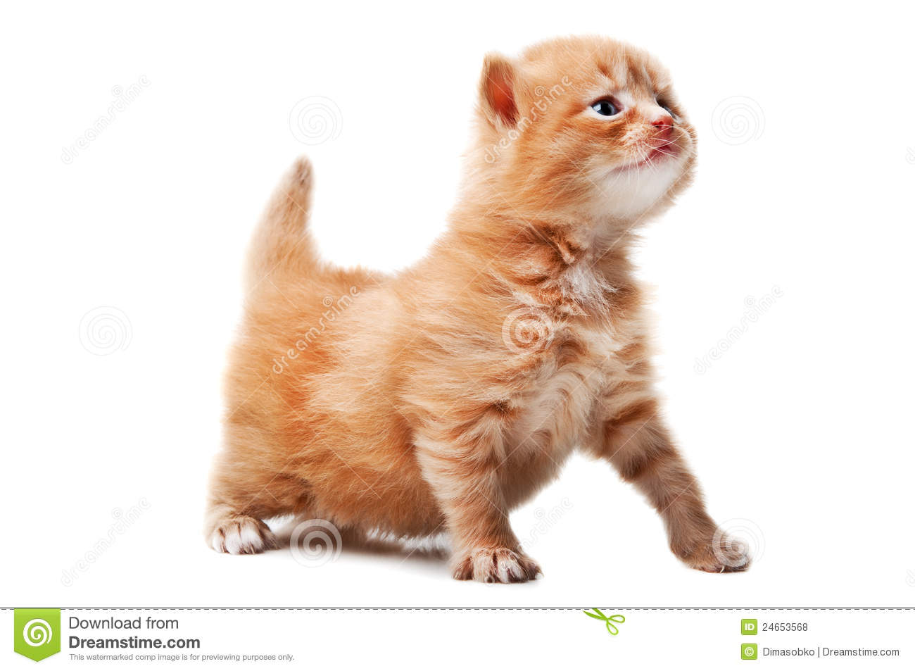 Funny Ginger Cat Royalty Free Stock Photos - Image: 24653568