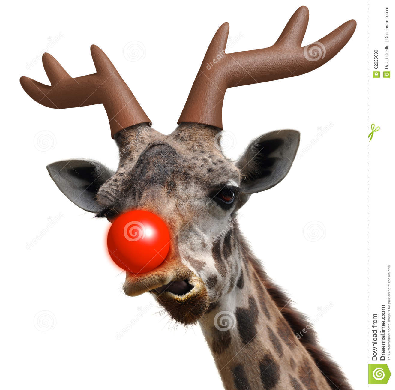 Funny Giraffe Face Dressed As Santa Claus' Red Nosed Reindeer For ...