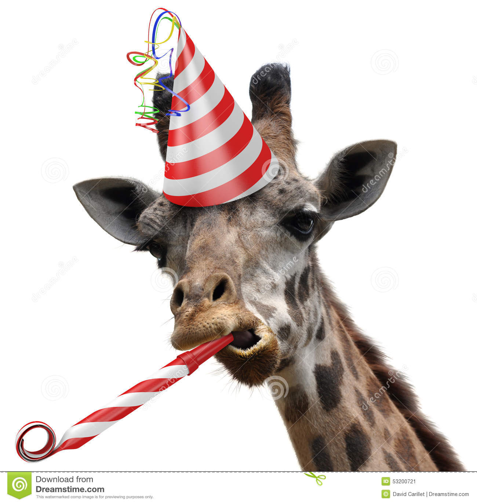 Giraffe Cake Cake Ideas And Designs