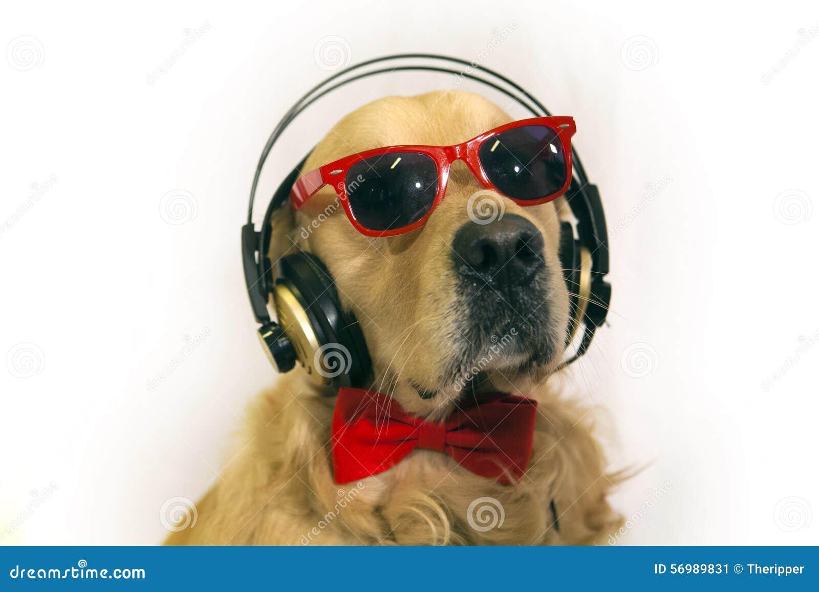 Dog With Ear Portrsit