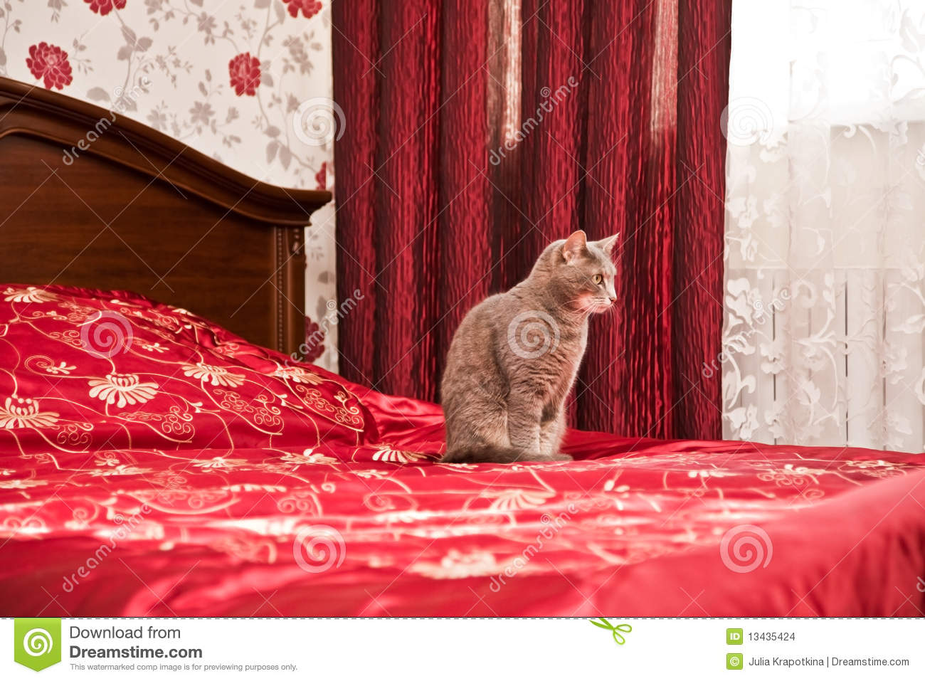 Funny grey cat in bedroom interior stock images image Funny bedroom
