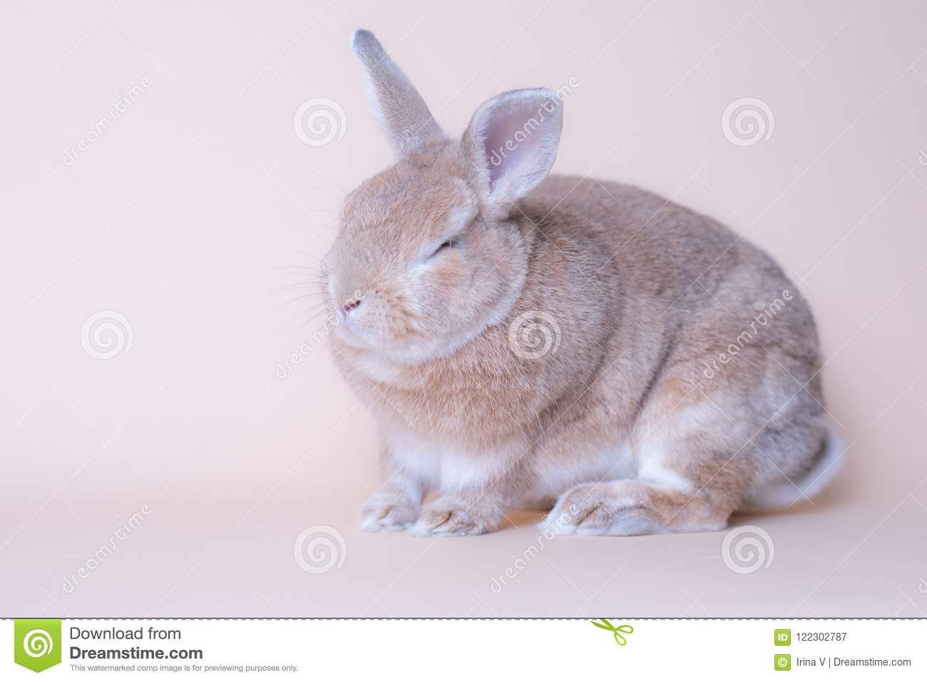Funny Hilarious Baby Bunny Rabbit Sitting On A Solid Pink Background