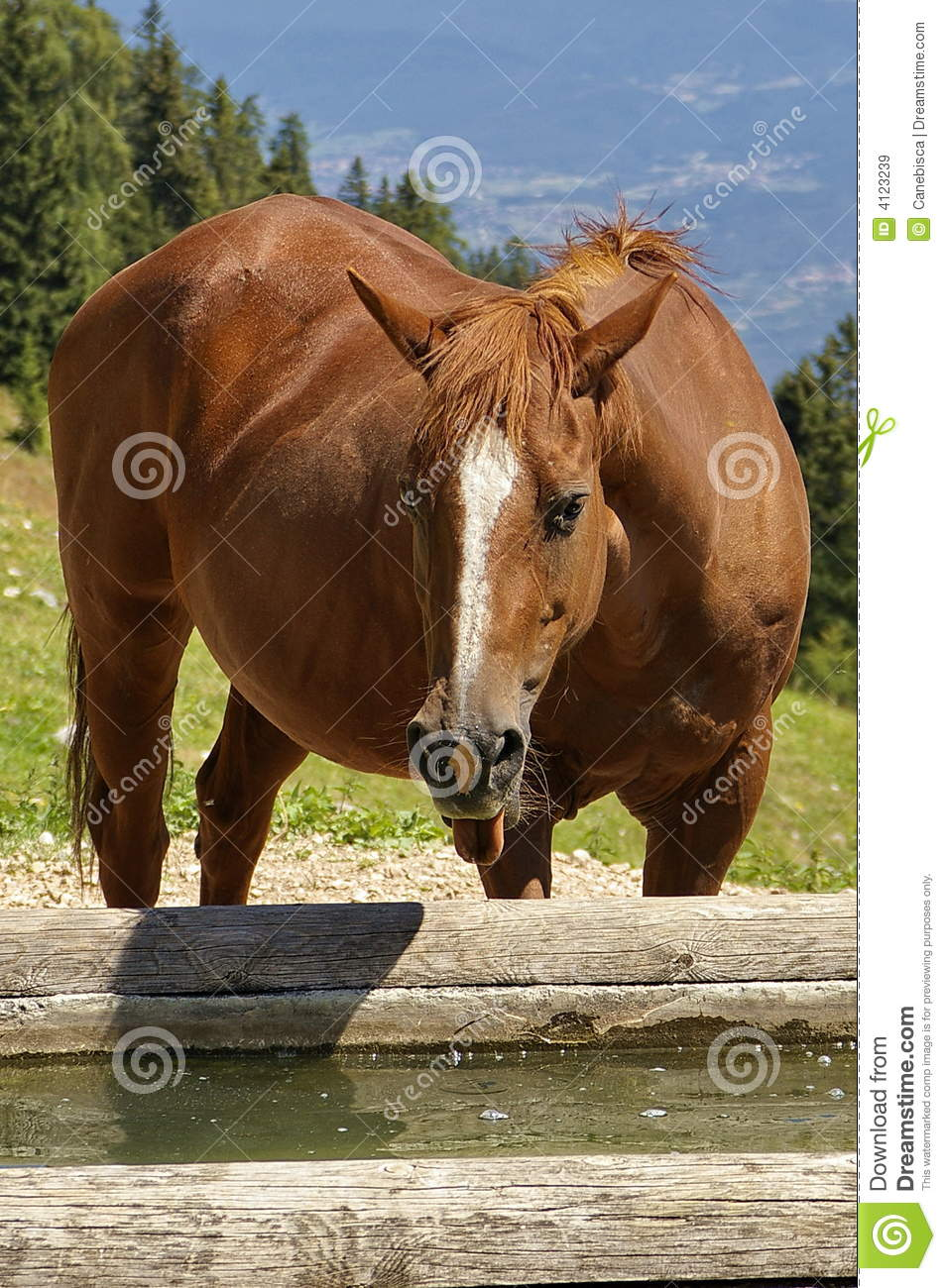 Funny Horse Royalty Free Stock Images - Image: 4123239