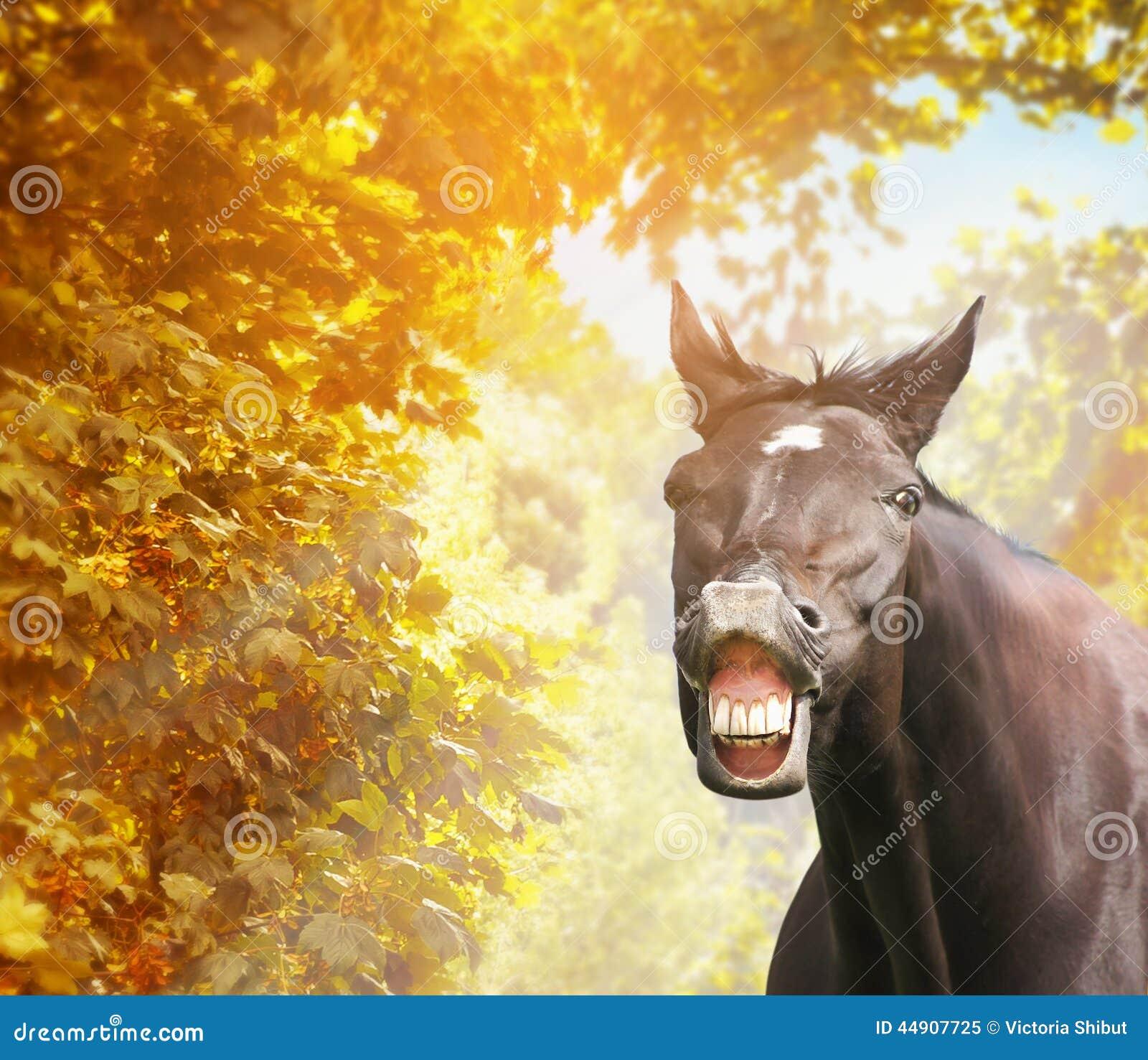 Funny horse in autumn foliage in sunshine