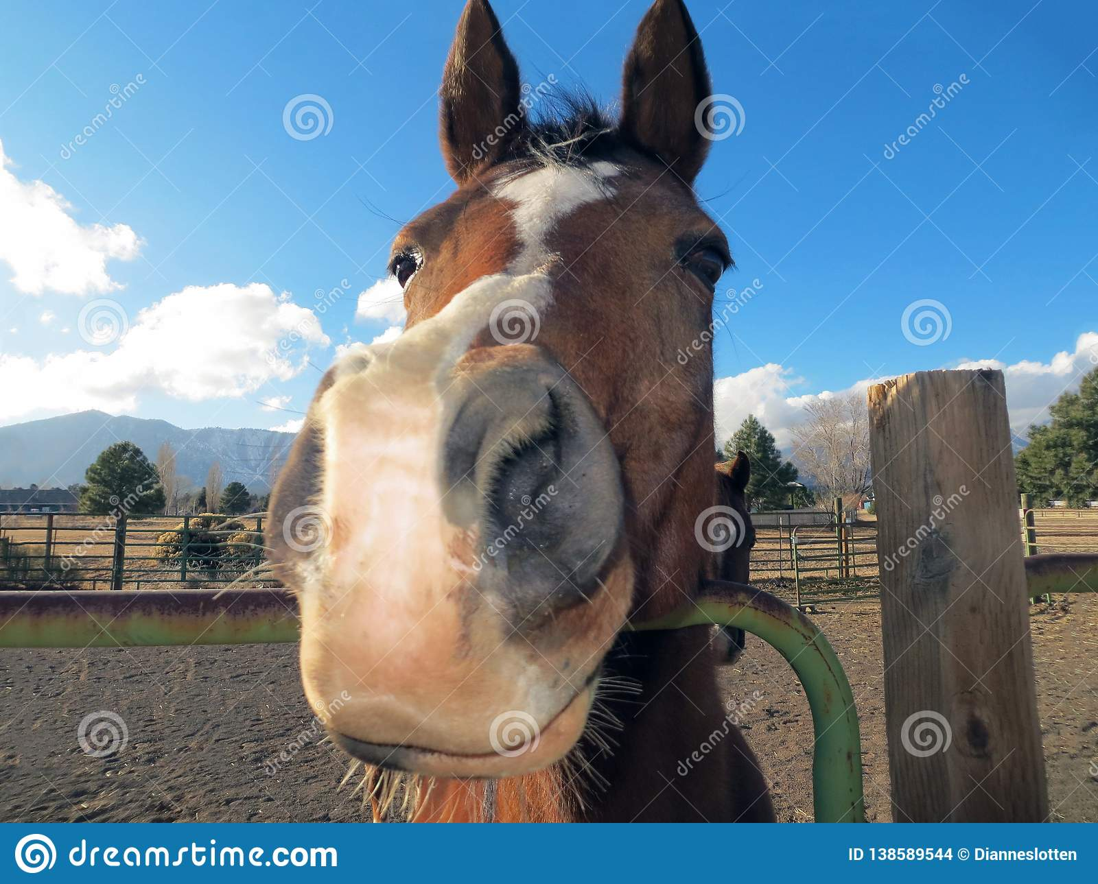 Funny Horse Face Looking At Camera Stock Photo Image Of Thinking Silly 138589544