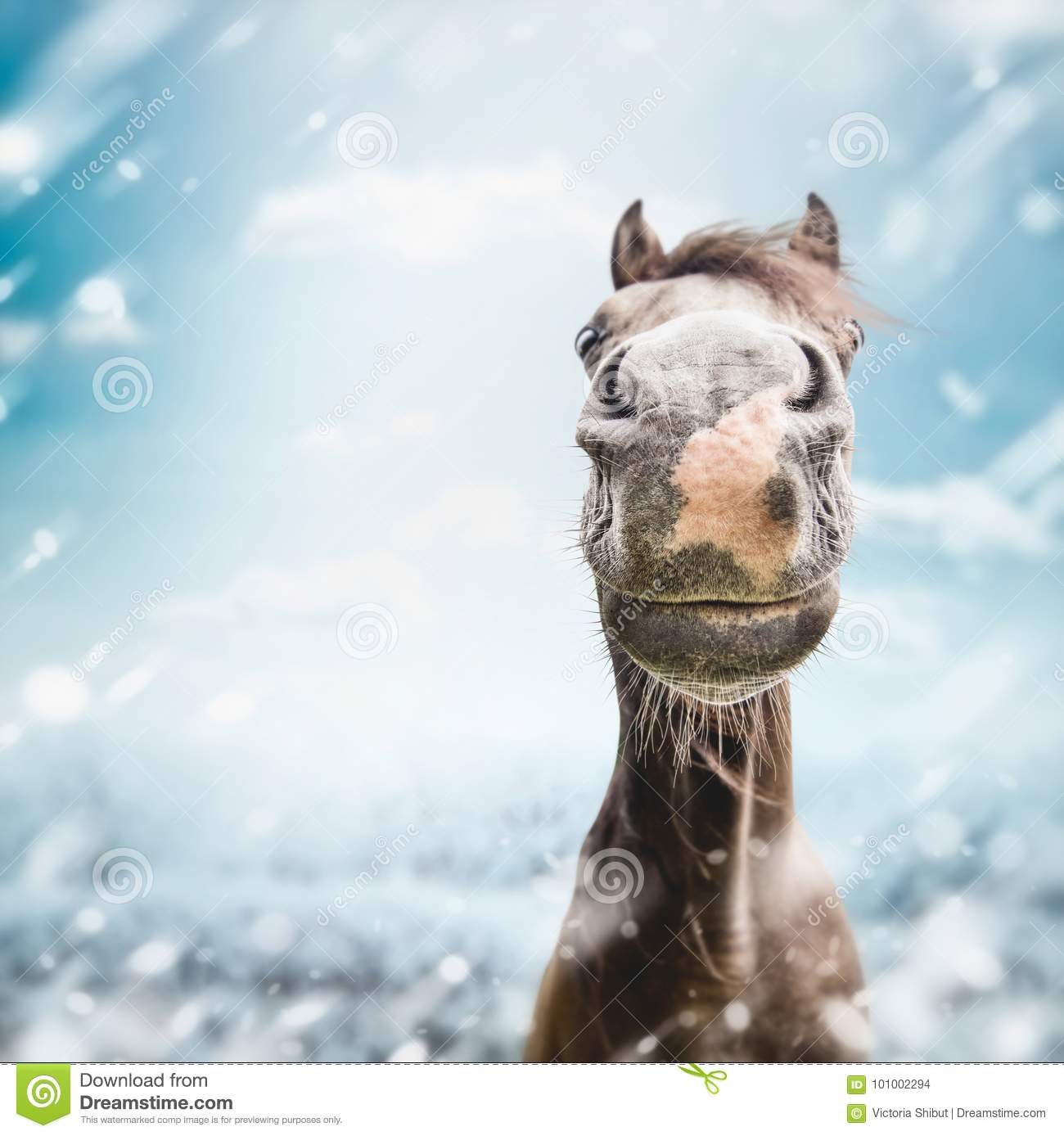 11 936 Funny Horse Photos Free Royalty Free Stock Photos From Dreamstime