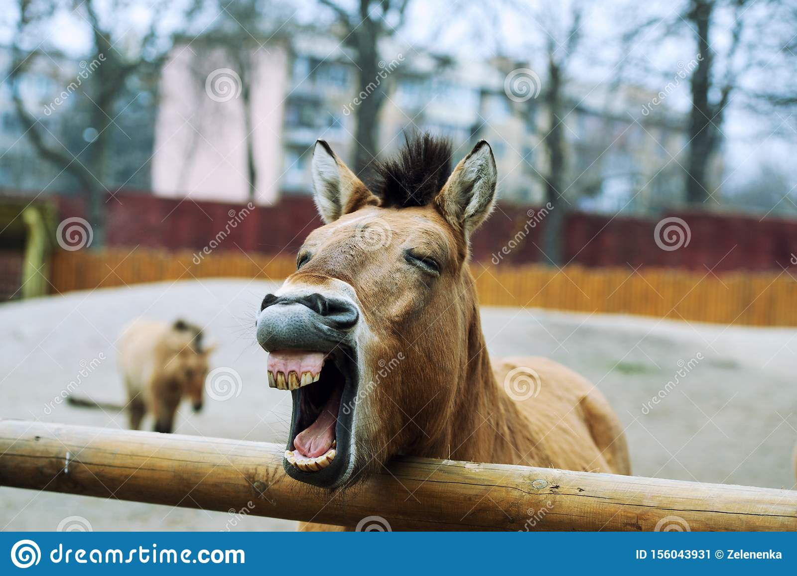 Funny Horse Stock Image Image Of Gelding Animal Funny 156043931