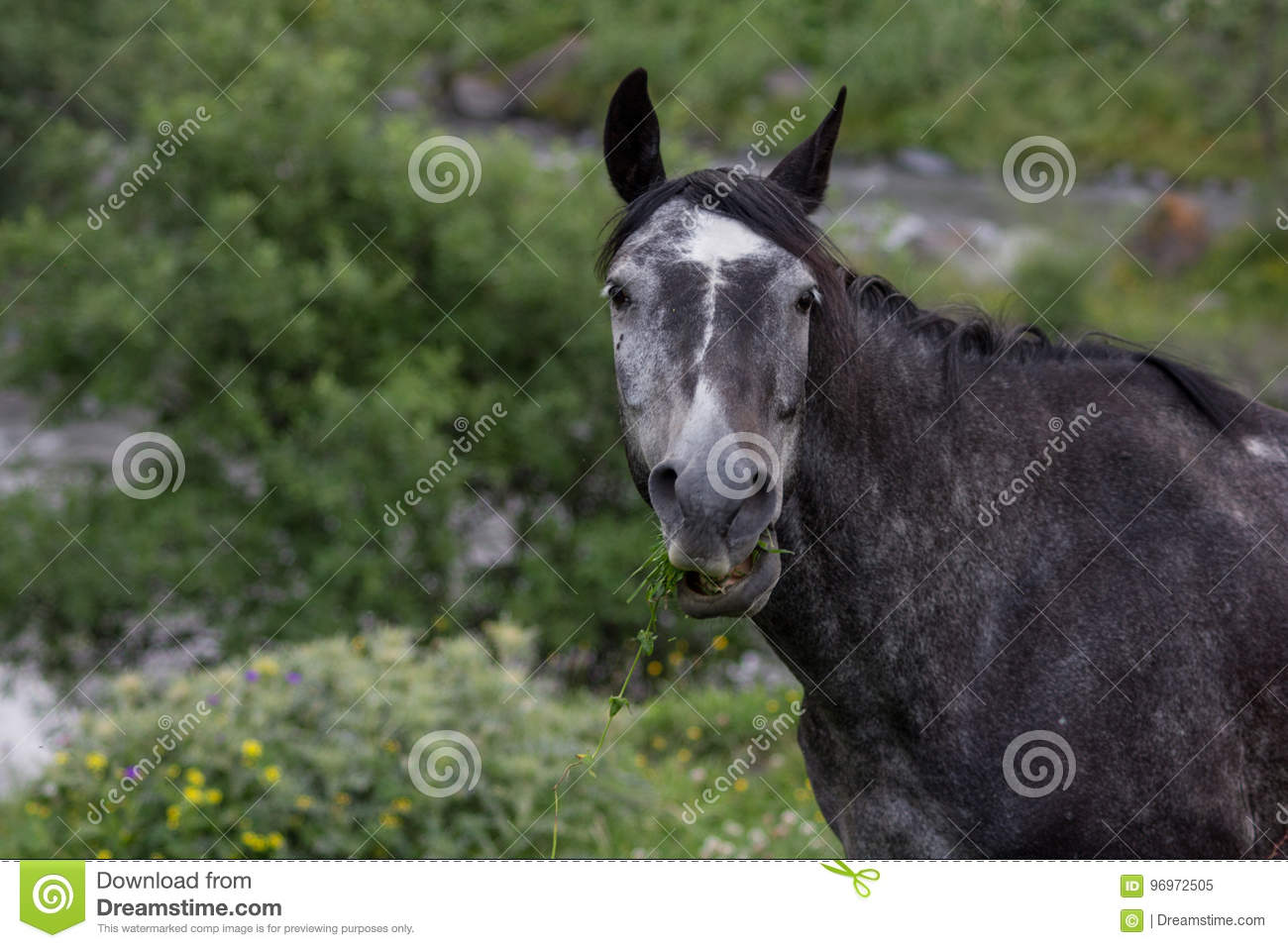 Funny Horse Stock Image Image Of Funny Ears Chew Georgia 96972505