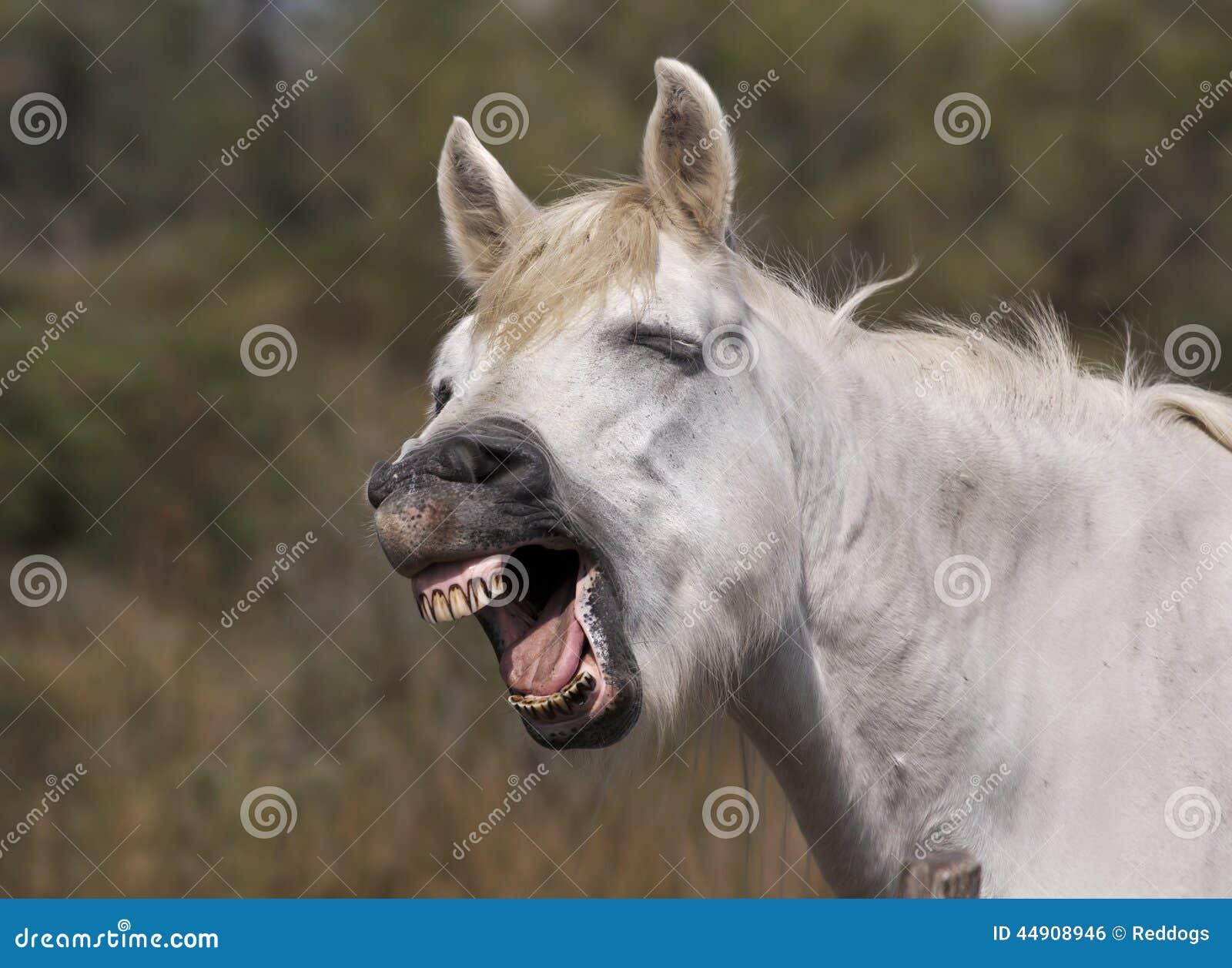 united states horse racing