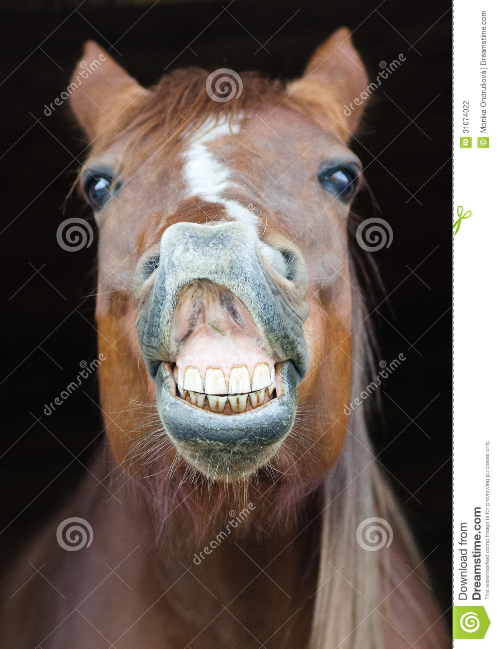 11 942 Funny Horse Photos Free Royalty Free Stock Photos From Dreamstime