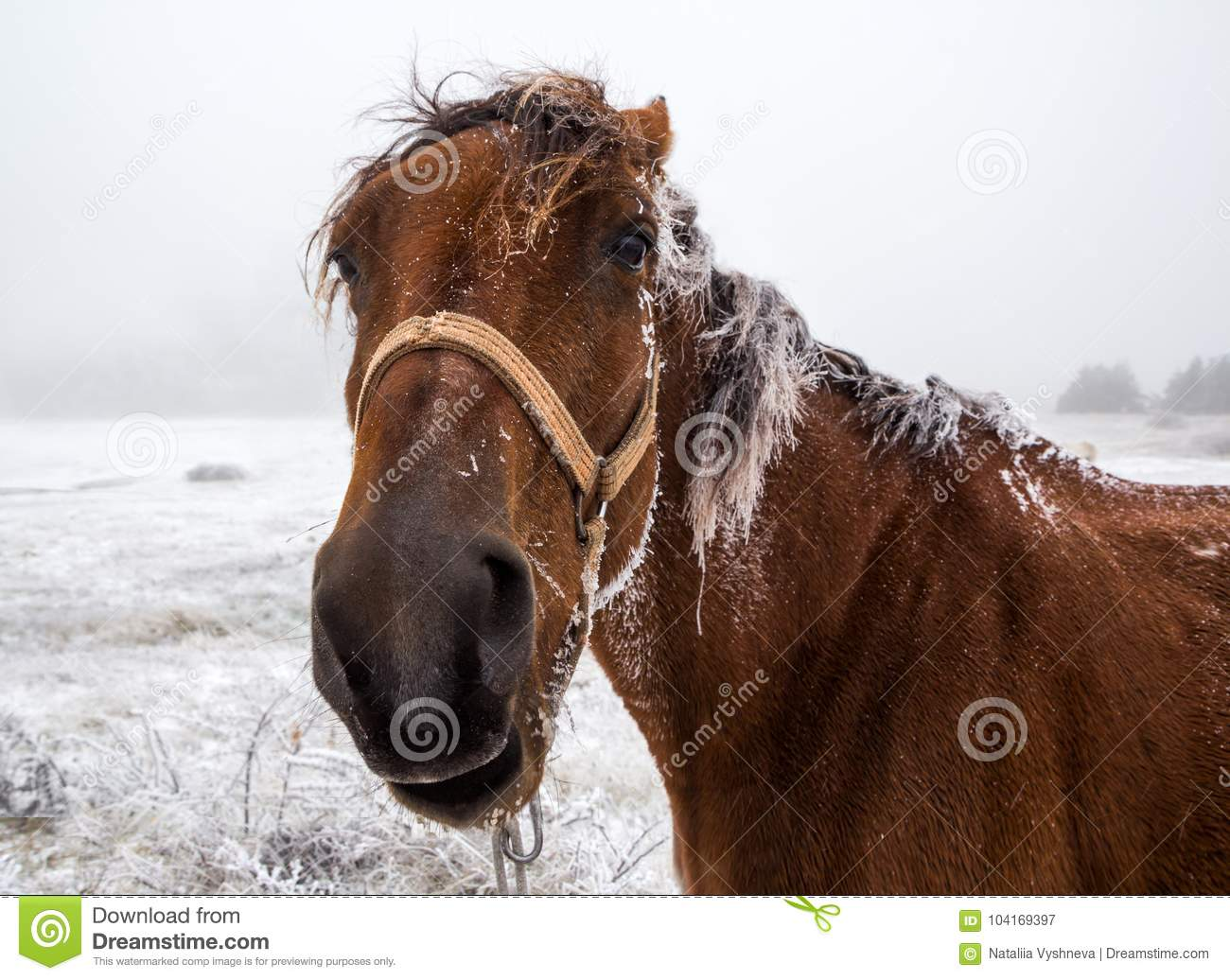 2 352 Funny Looking Horse Photos Free Royalty Free Stock Photos From Dreamstime