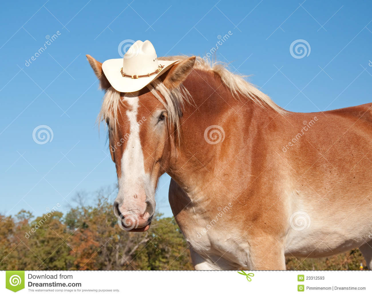 Cowboy Hat Background Funny Image Of A Blond...
