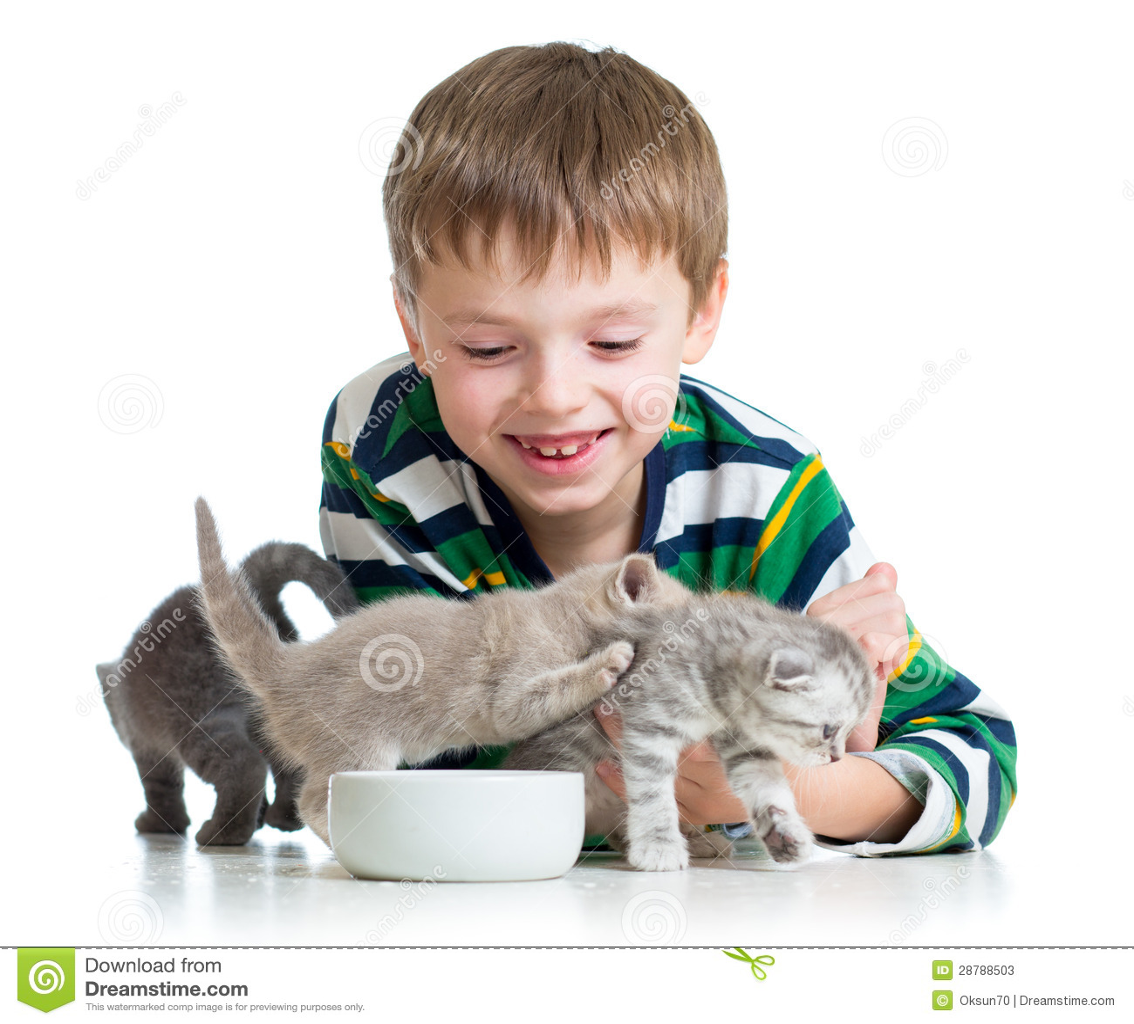 funny cute kittens videos