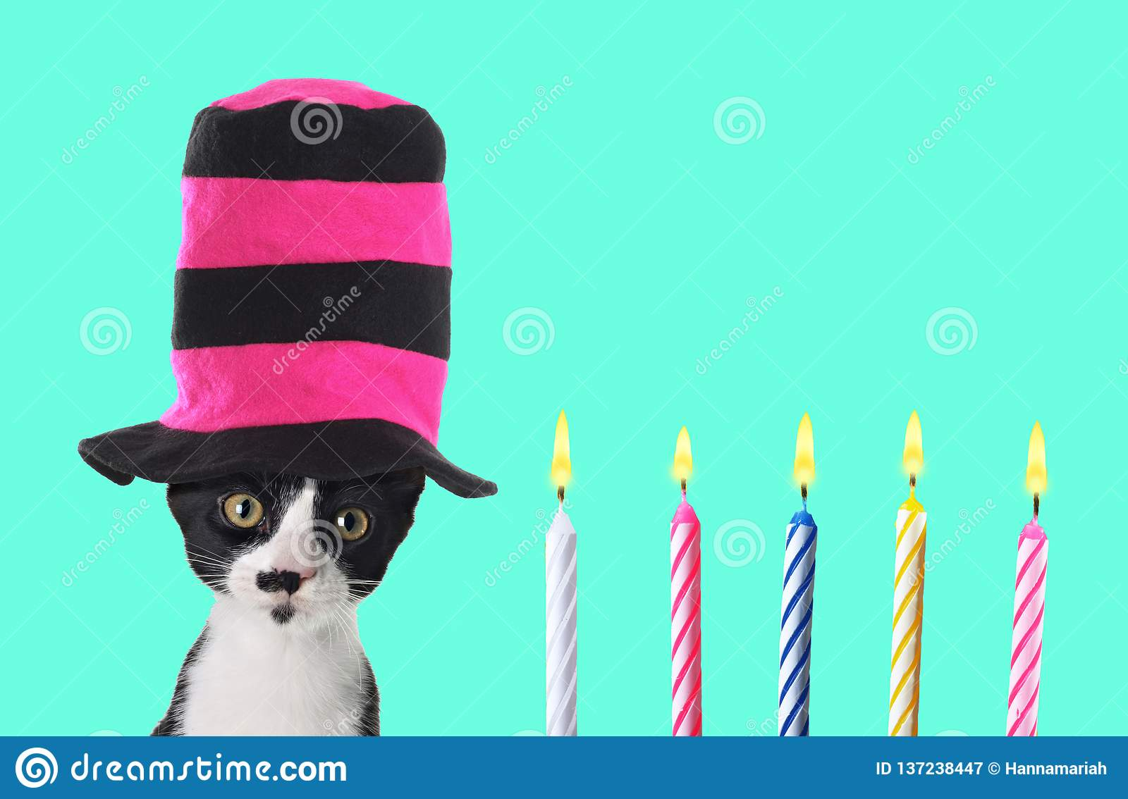 Funny Retro Birthday Kitten With Colorful Top Hat
