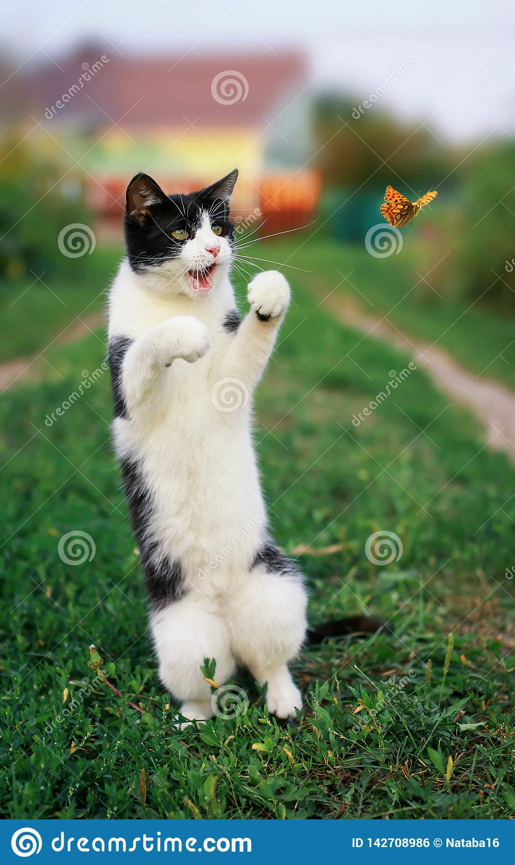 funny kitten in a summer sunny garden catches a flying orange butterfly jumping on its hind legs in clear weather in green