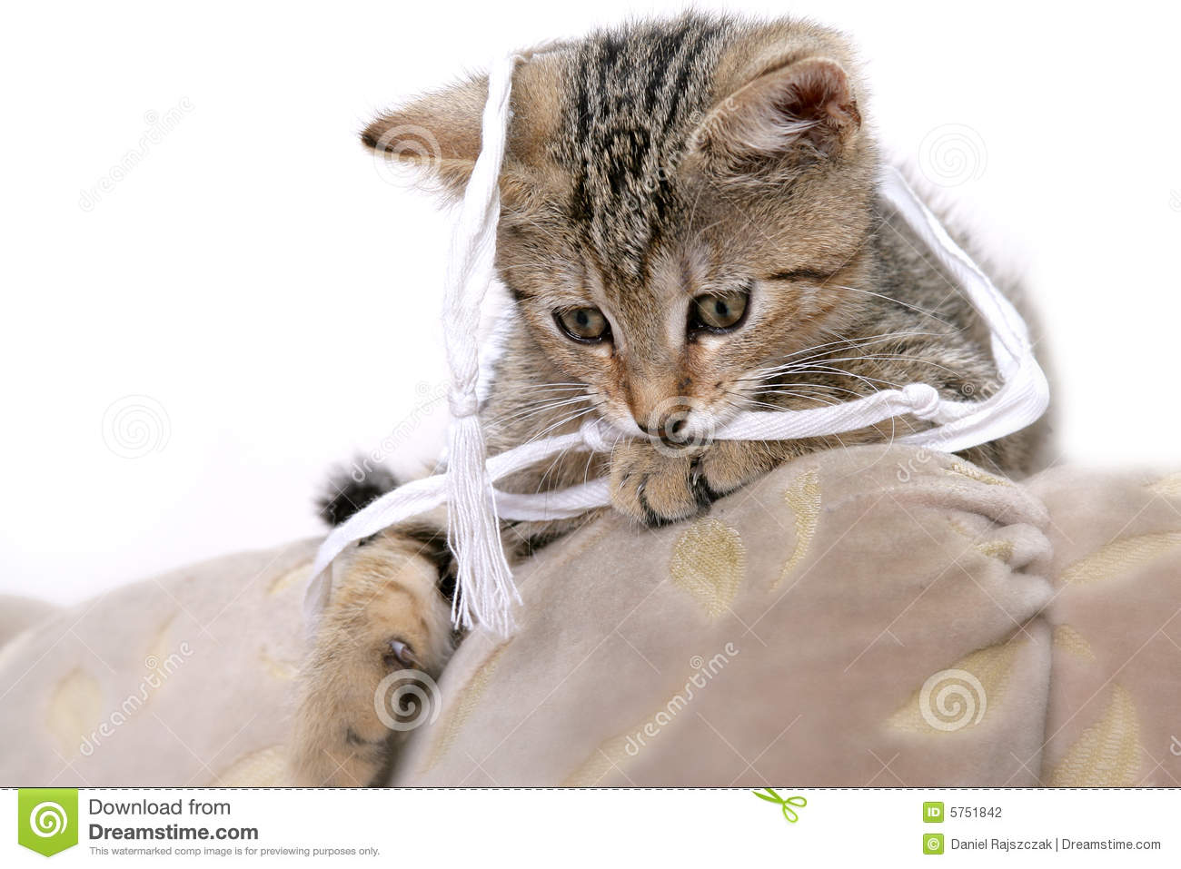 Funny kitty stock photo Image of charming cuddly content