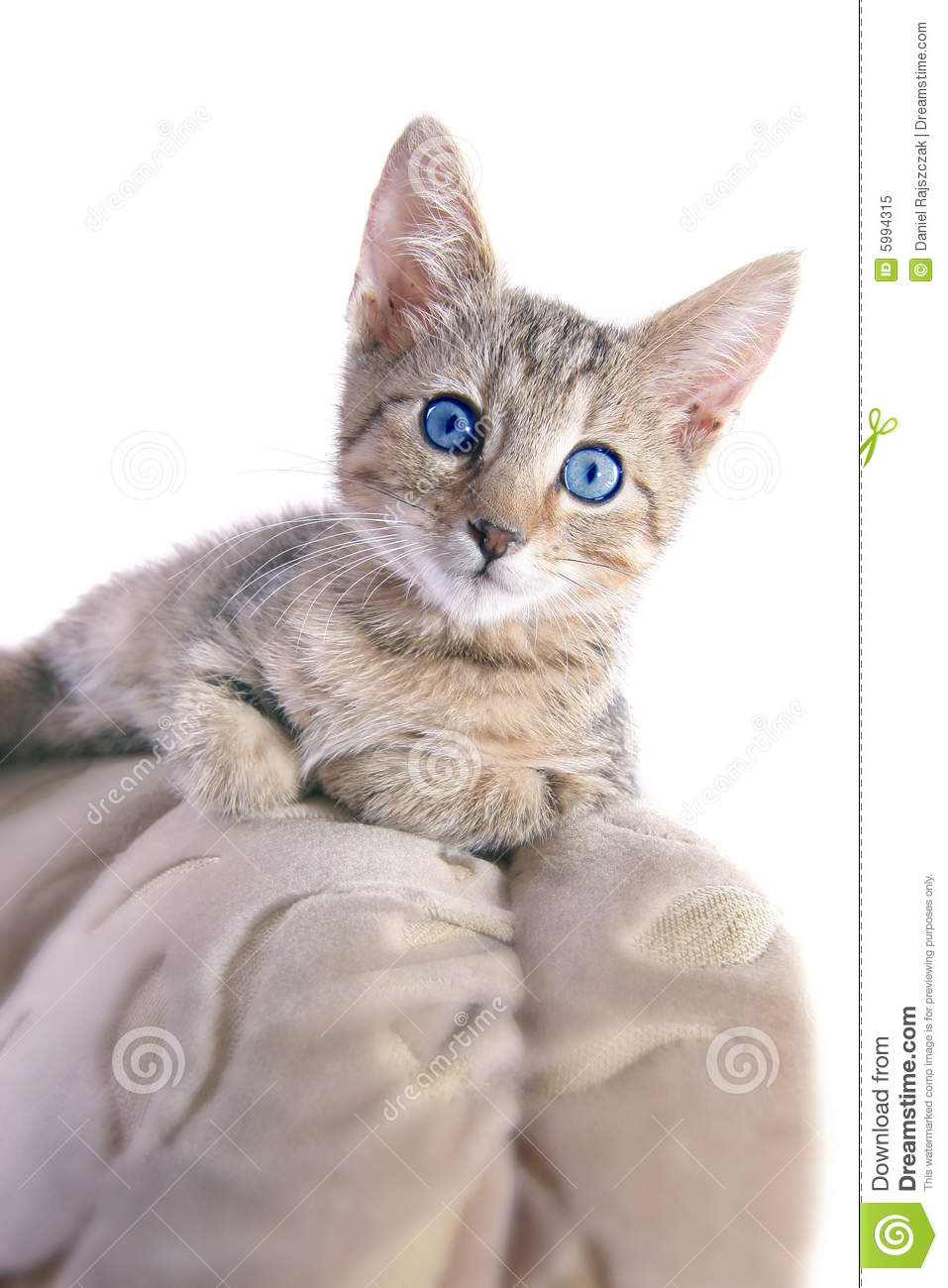 Funny kitty stock image Image of kitten coat claws