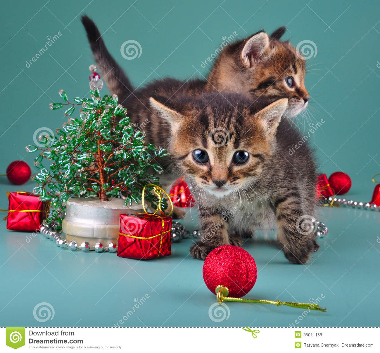 Funny Little Kittens With Handmade Christmas Tree And Balls Royalty ...