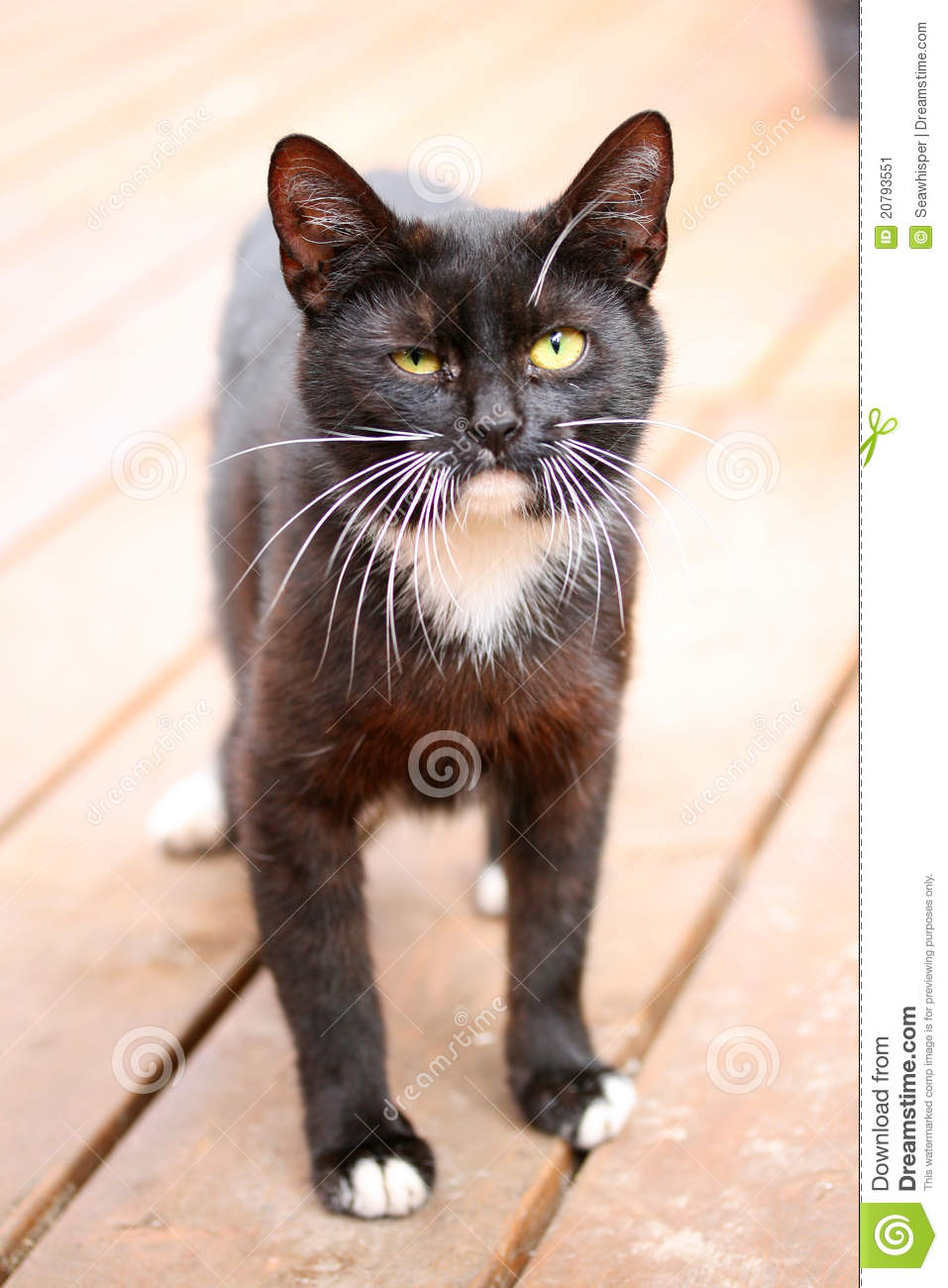 Funny Looking Black Cat Stock Image - Image: 20793551