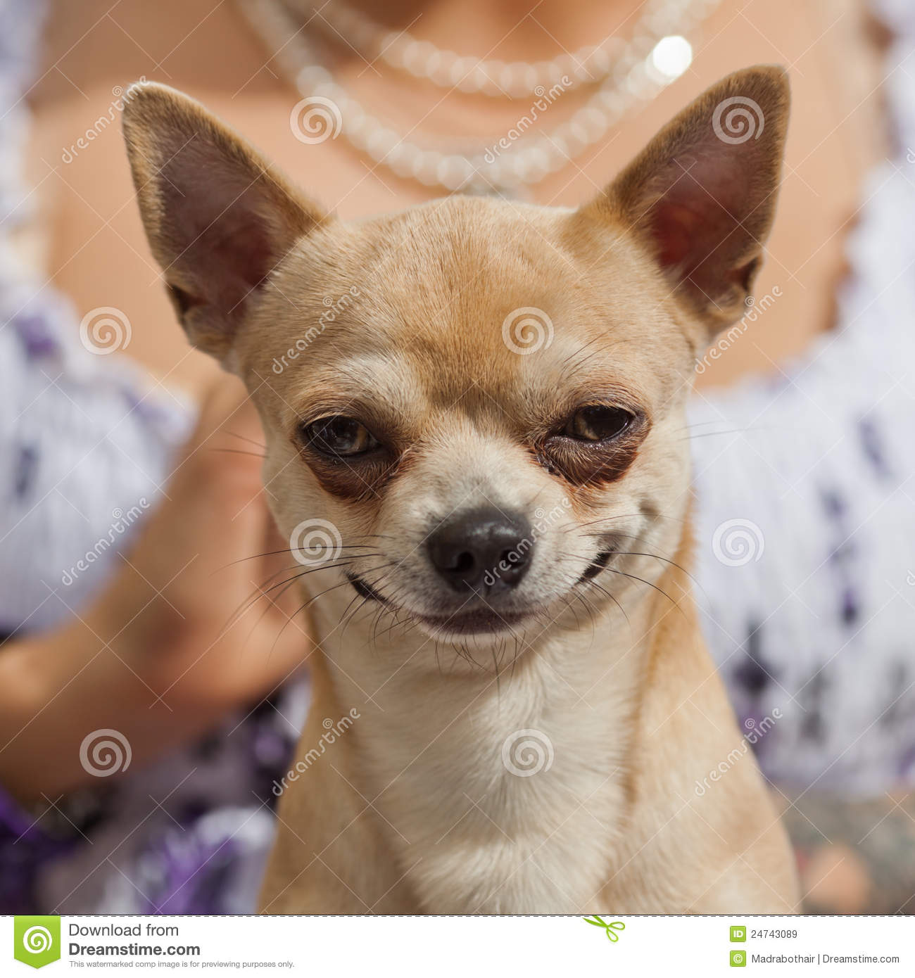 Funny Dog Videos Of All Time