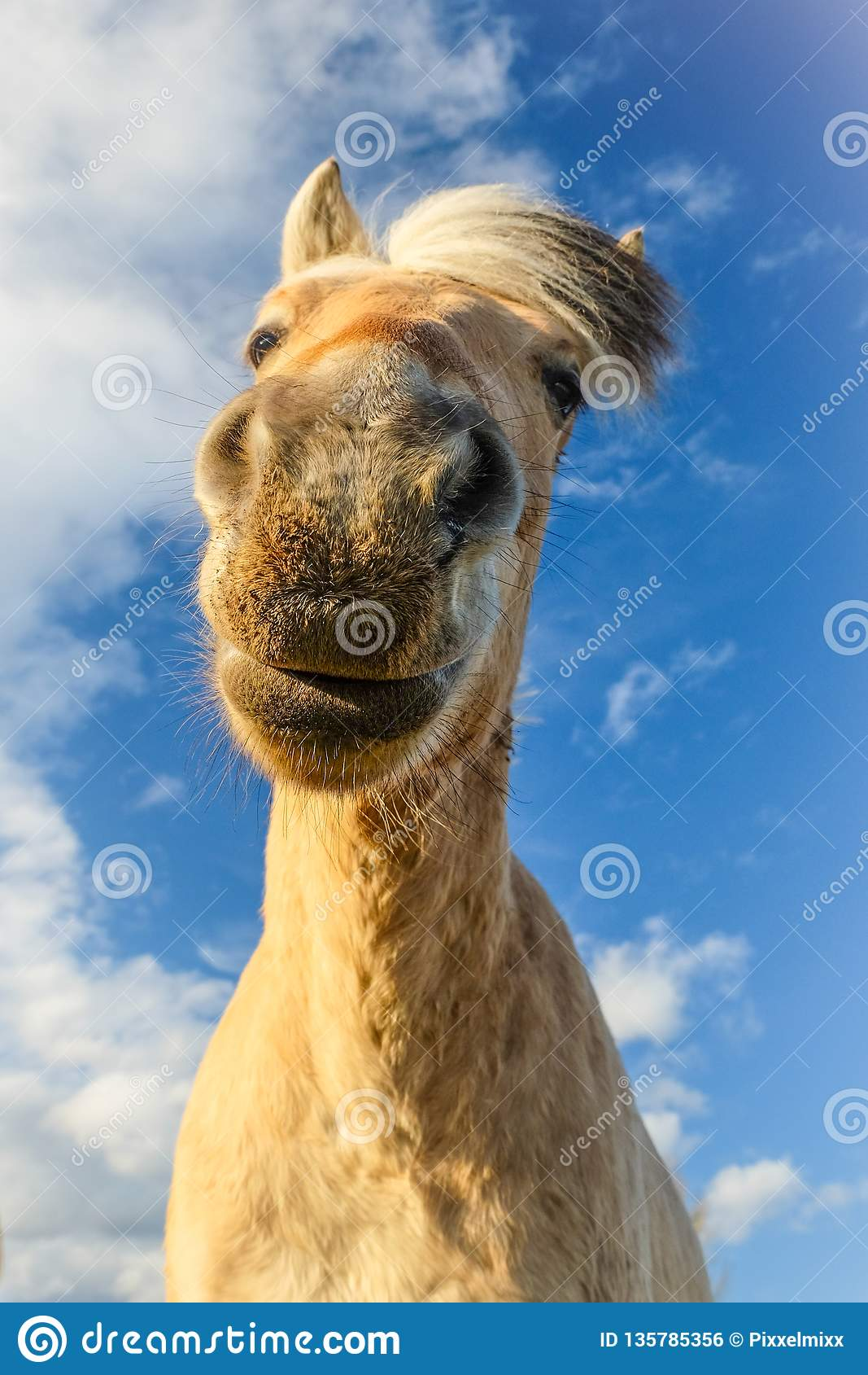 Funny Looking Horse Stock Photo Image Of Mammal Riding 135785356