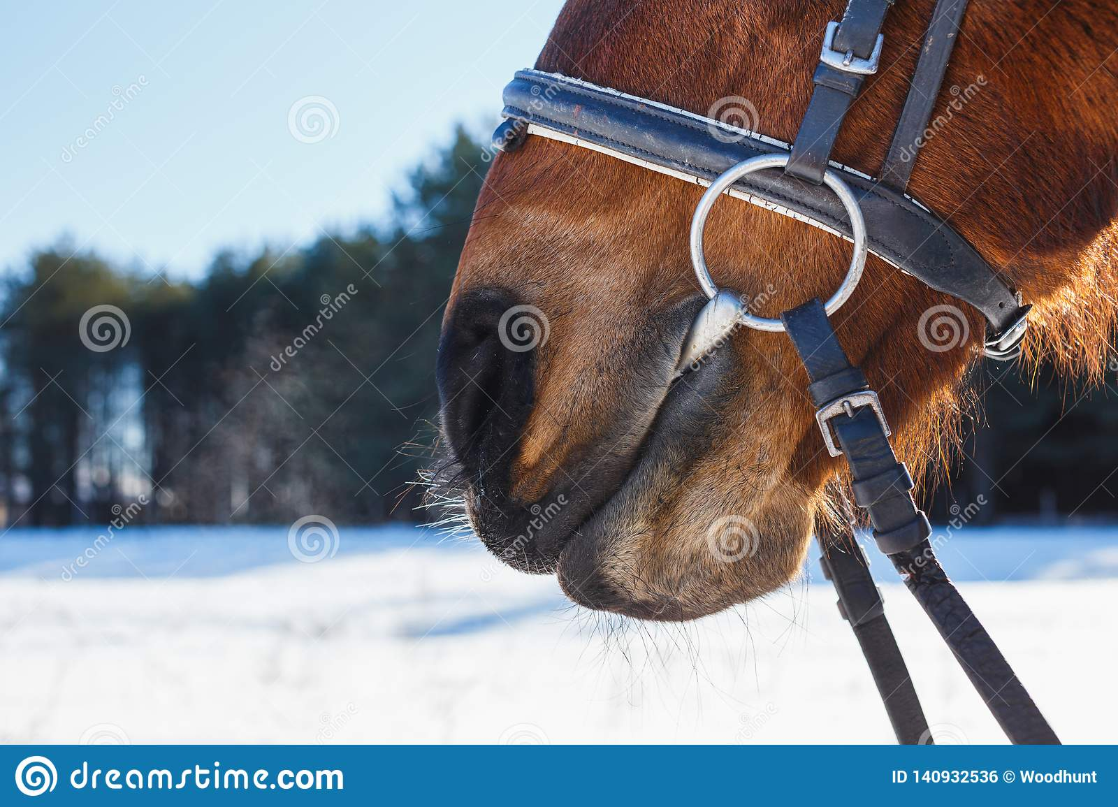 Funny nose of the horse against the blue sky