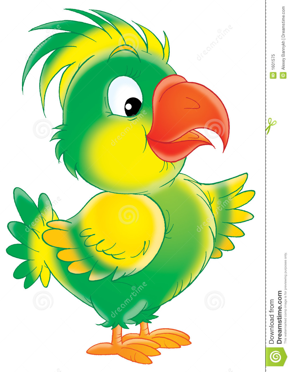 funny parrot stock illustration image of feather