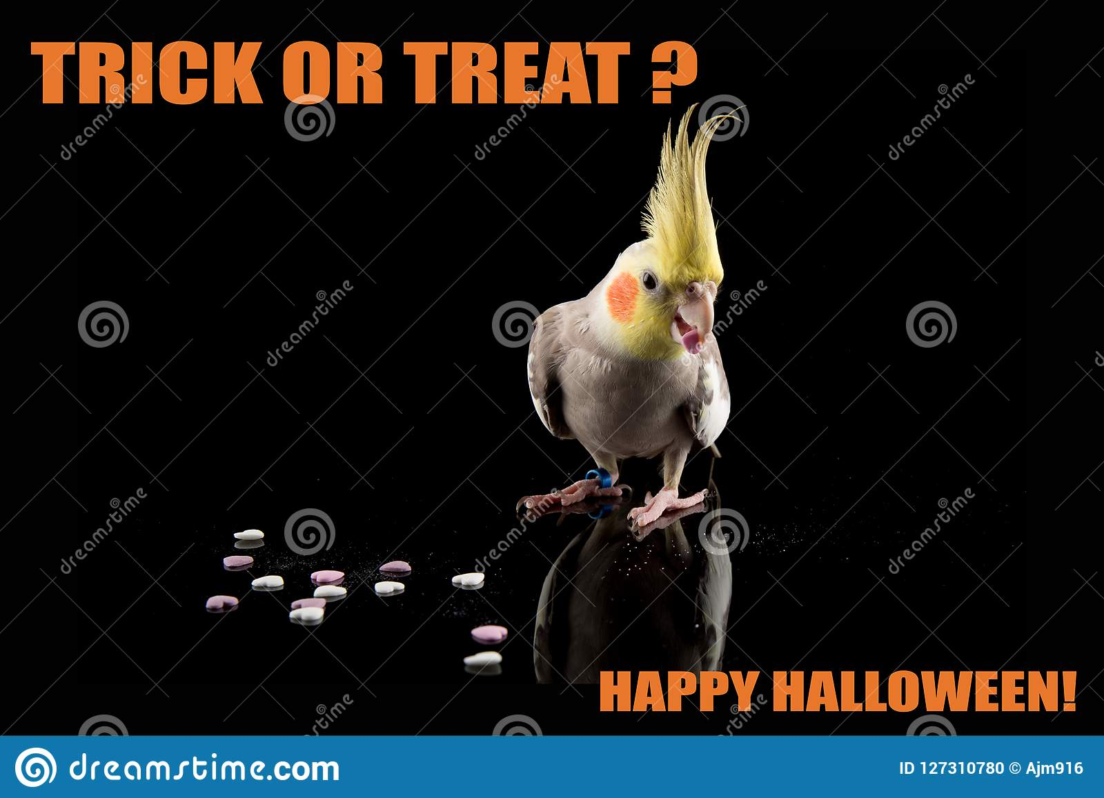 Funny Parrot Halloween Memetrick Or Treat Cockatiel Eating Candy
