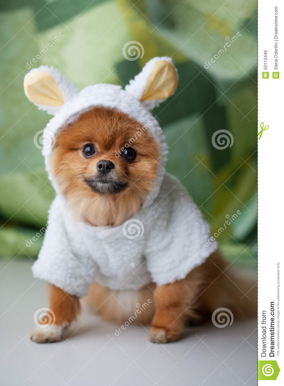 Funny Pomeranian Puppy Dressed As Lamb Stock Photo - Image ... Relaxing Dogs