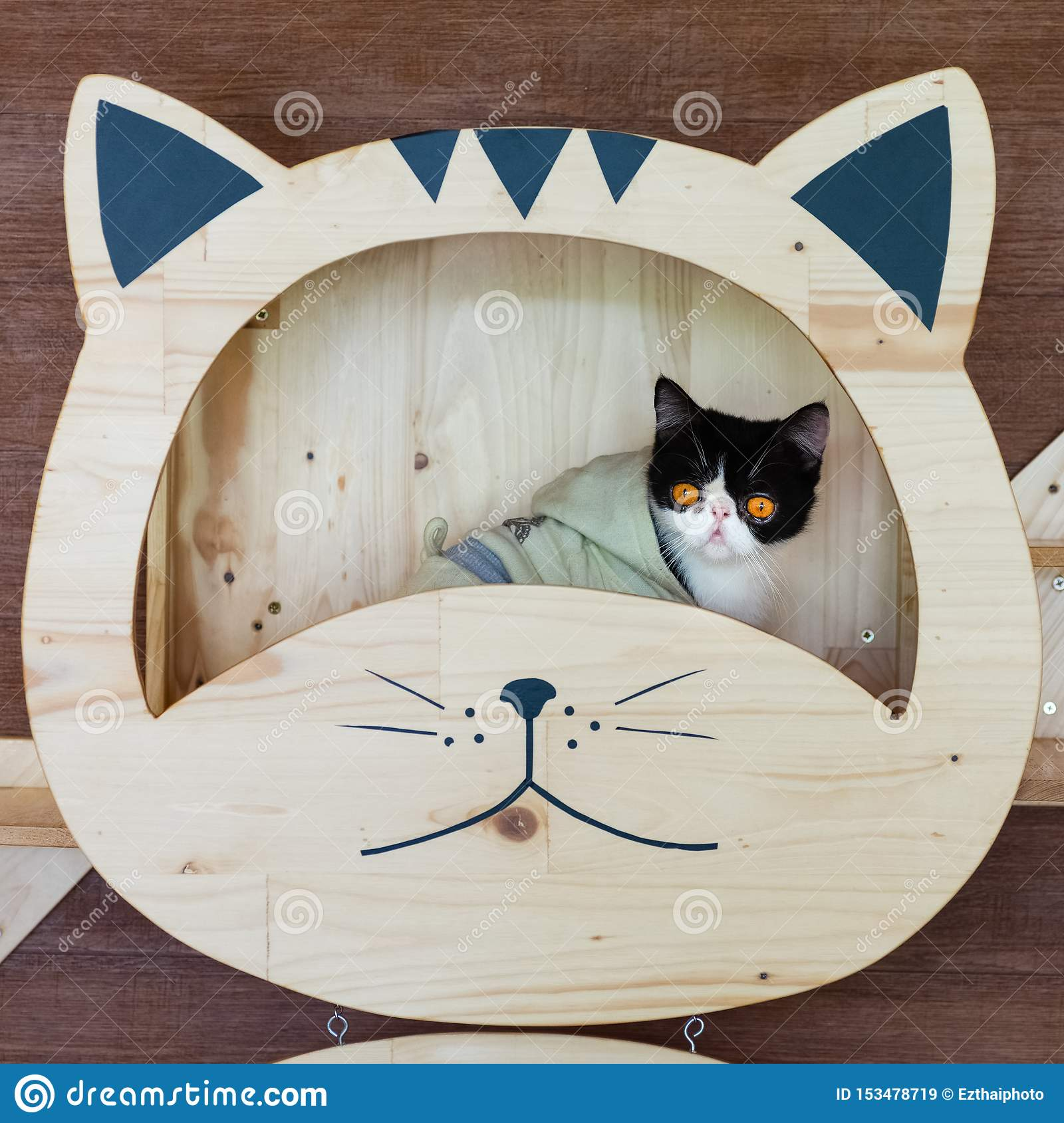 Funny portrait of black and white cat looking with funny emotions face on the cat face shelf. Cute little cat sitting under on