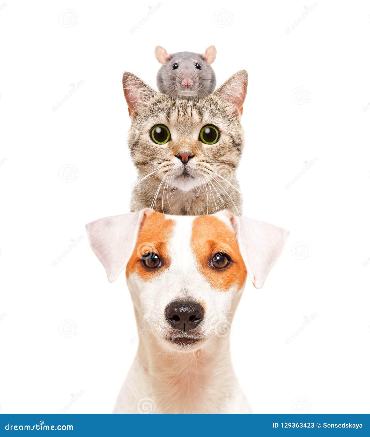 Funny portrait of cute pets
