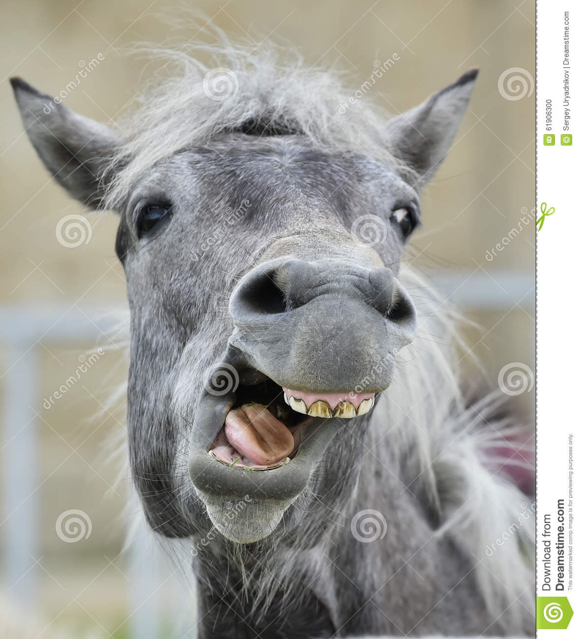 316 Funny Portrait Laughing Horse Photos Free Royalty Free Stock Photos From Dreamstime