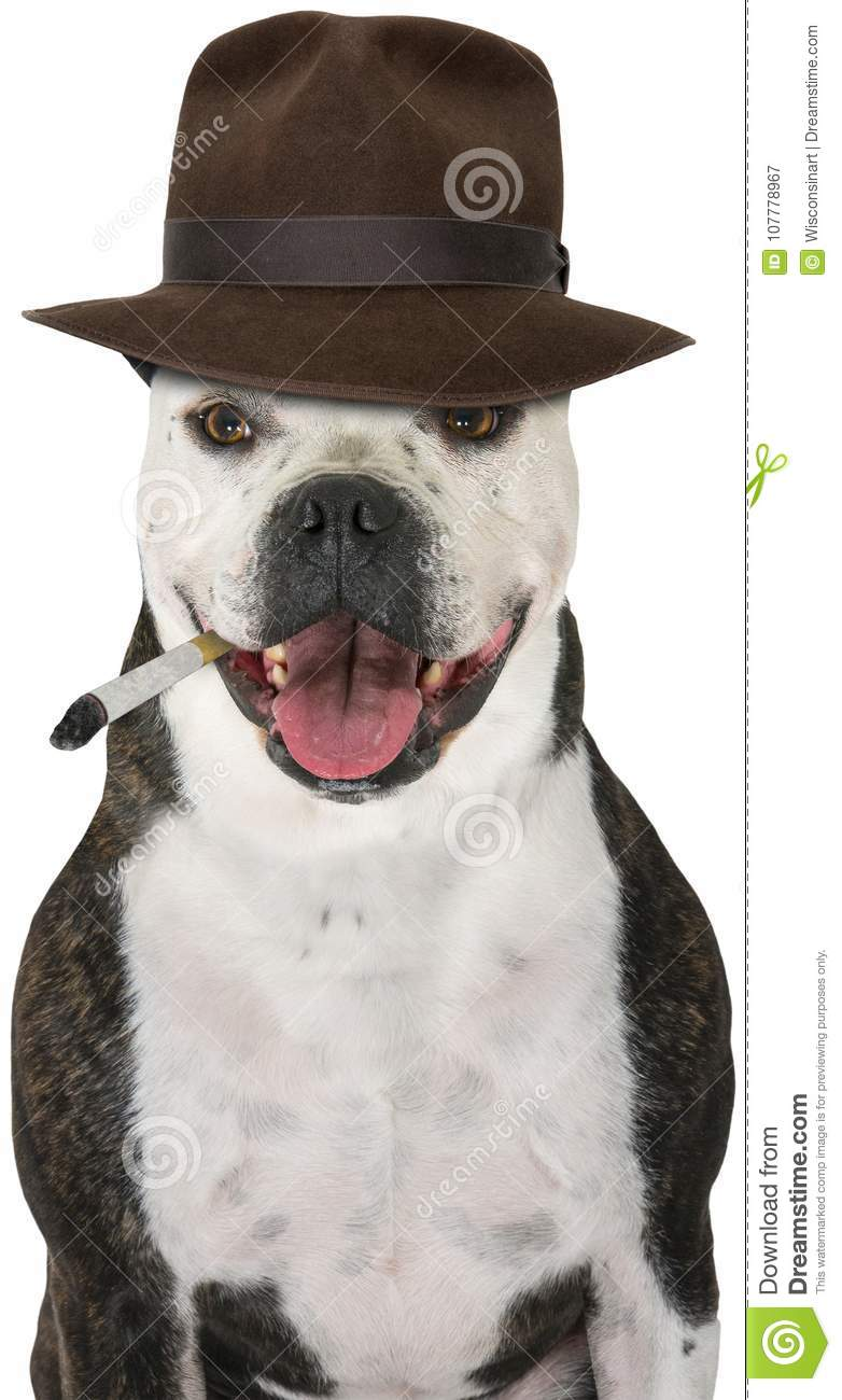 Funny Private Detective Dog, Isolated