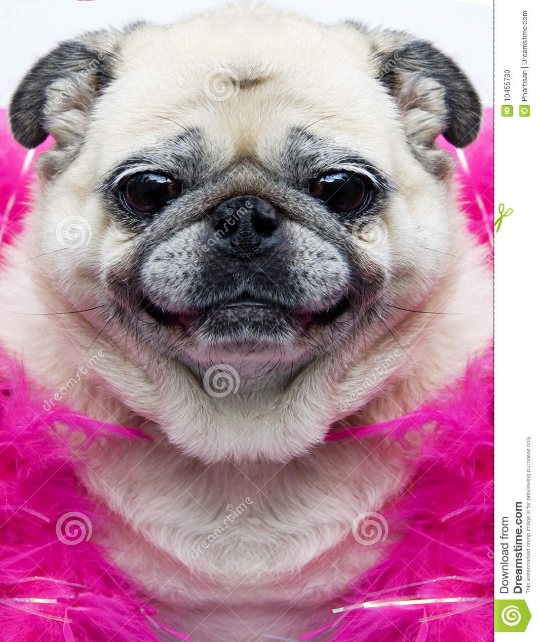 Funny Pug Face Royalty-Free Stock Image | CartoonDealer ...
