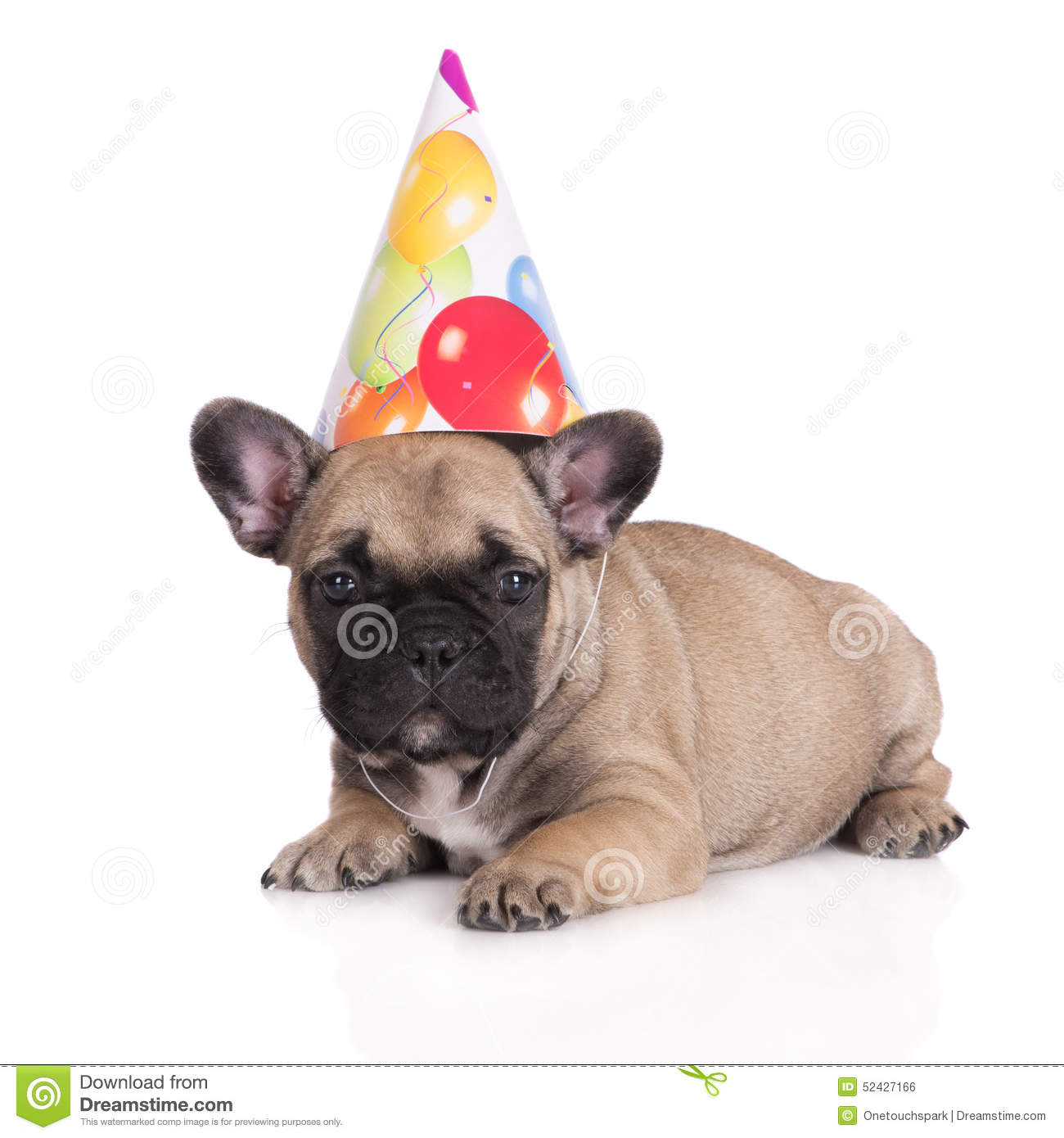 Funny Puppy In A Birthday Hat Stock Photo Image Of Baby