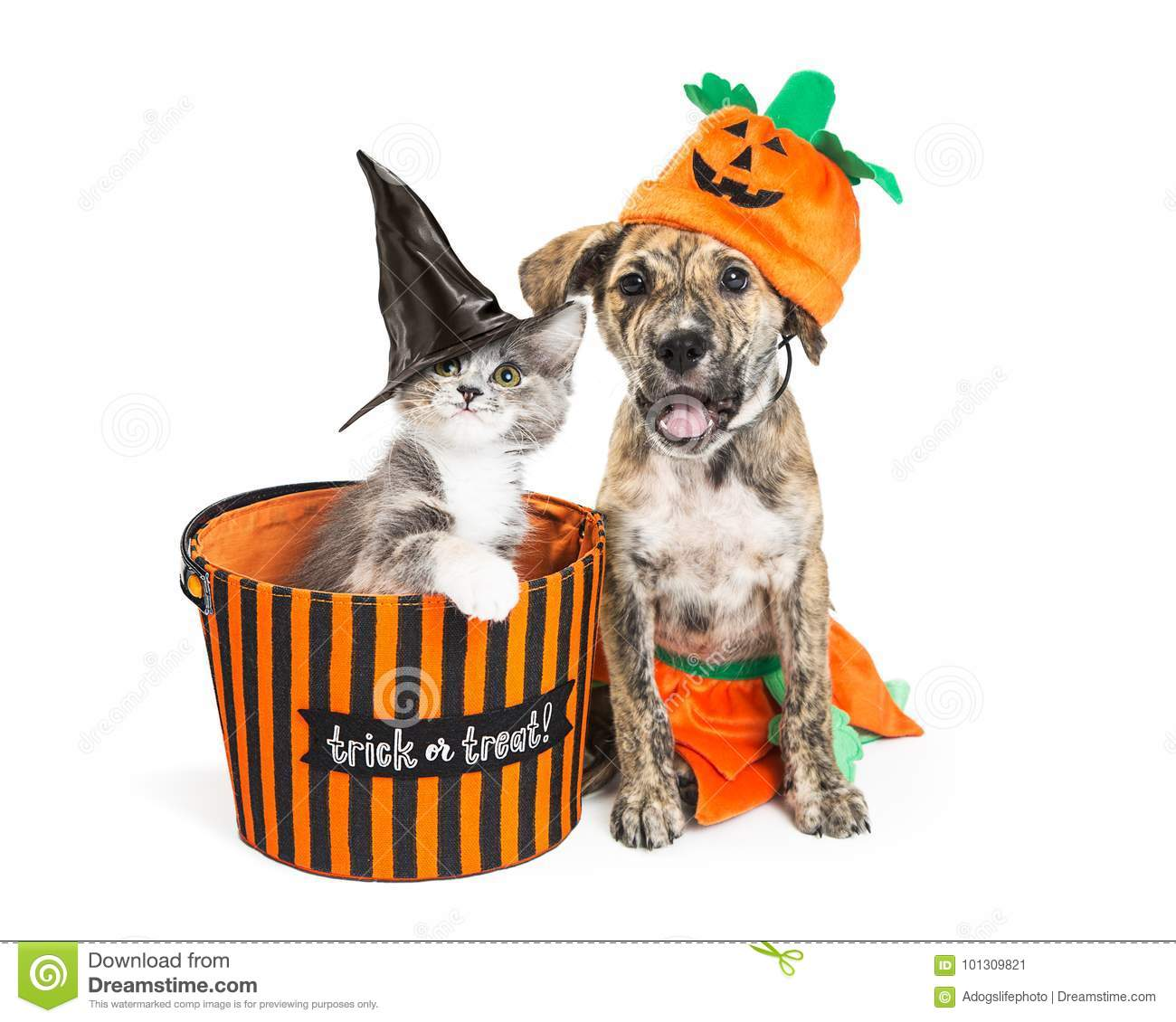 cute halloween kitten and puppy stock image image of treat