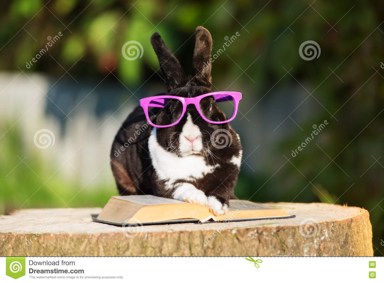 Funny rabbit funny rabbit pictures pictures of rabbits funny - Book Funny Glasses Rabbit