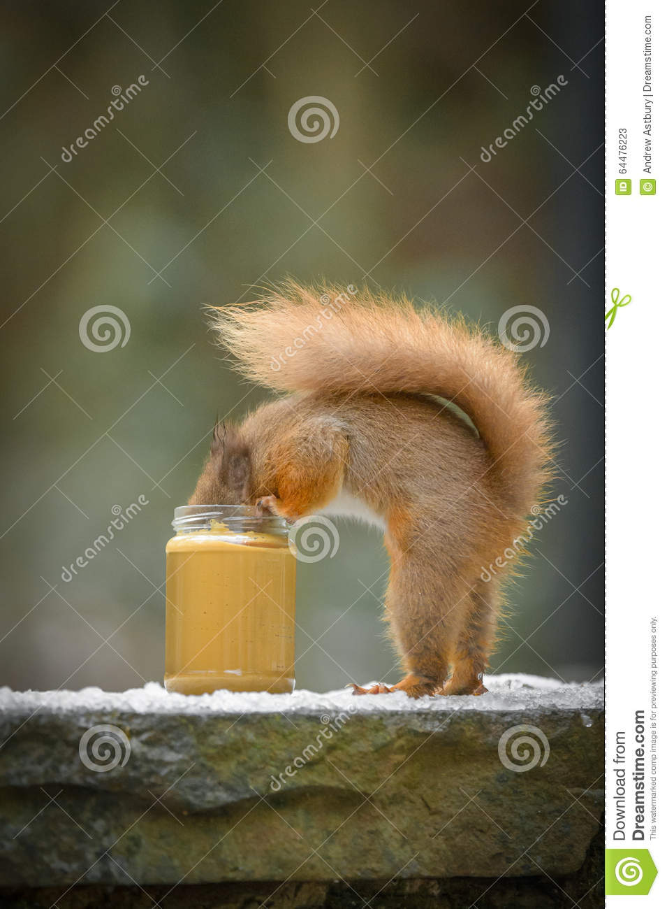 Funny Red Squirrel