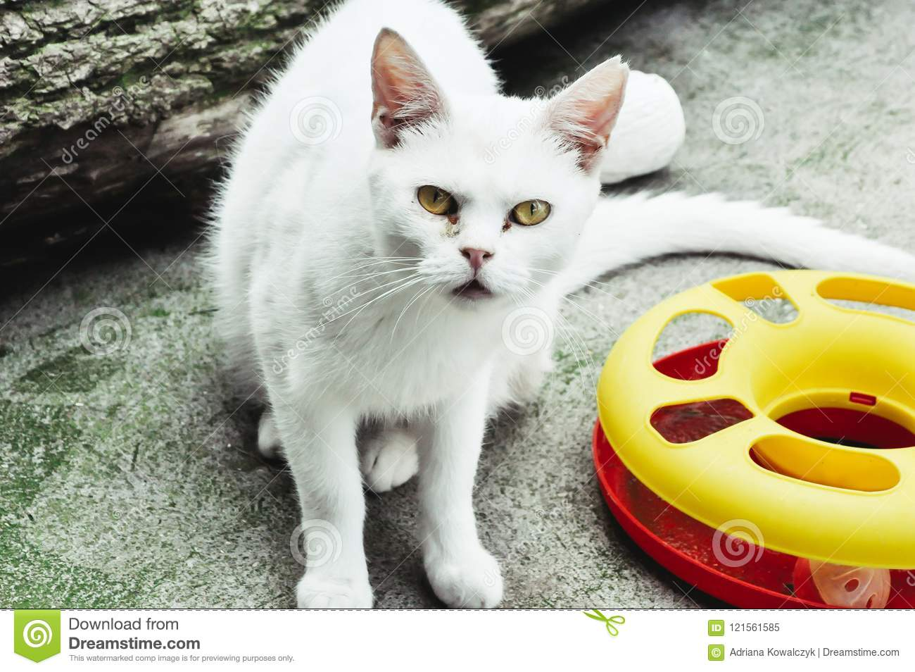 Funny Scared Curious White Cat Stock Image - Image of ...