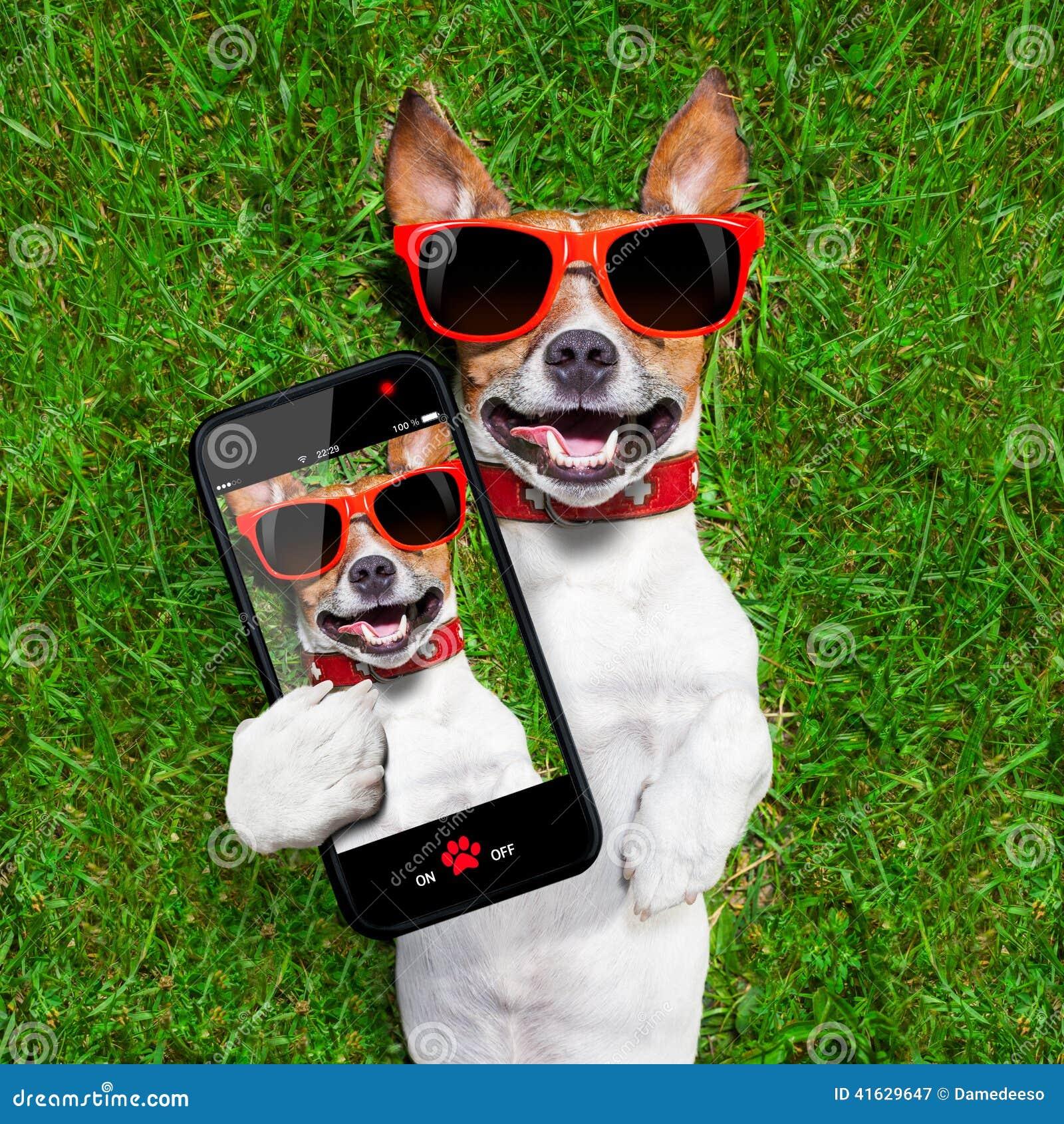 Funny Selfie Dog Stock Photo - Image: 41629647 - photo#16