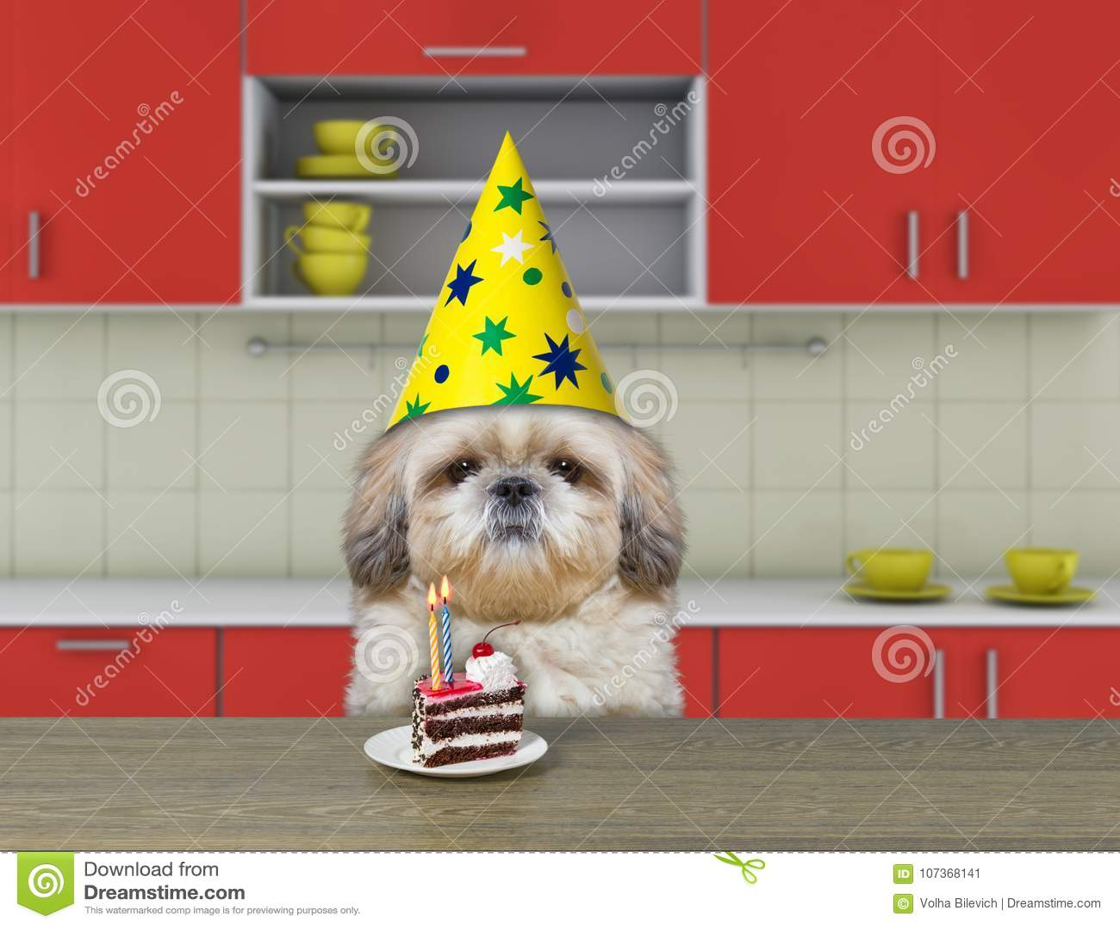 Funny Shitzu Dog Waiting To Eat Chocolate Cake Stock Image Image