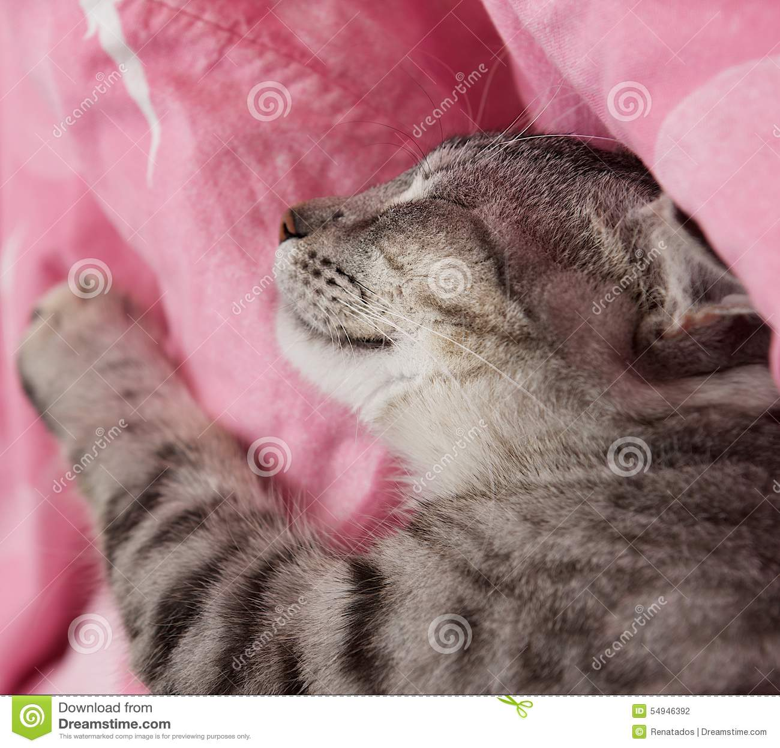 cat potty training