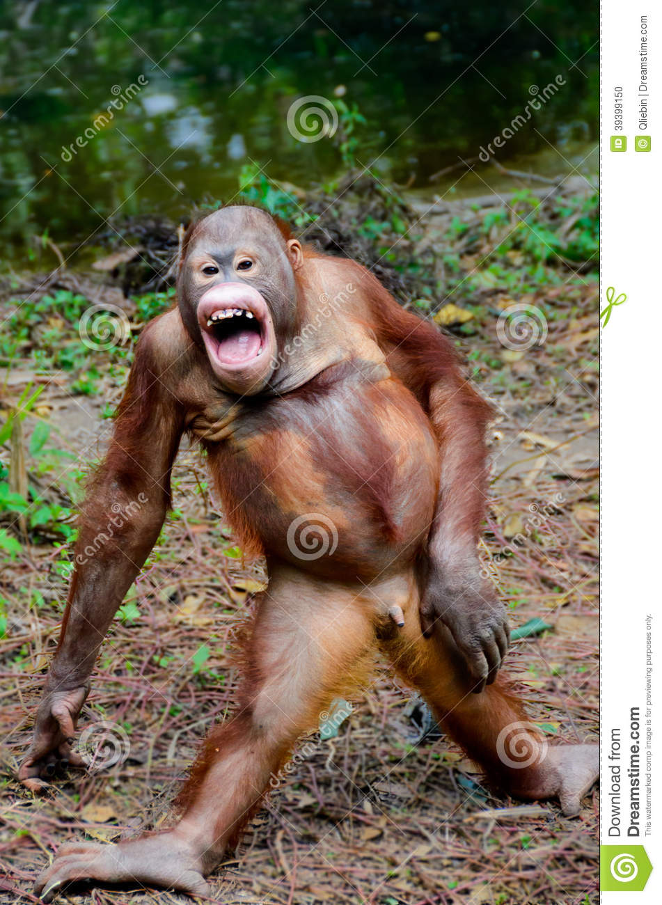 Monkey Laughing Clipart