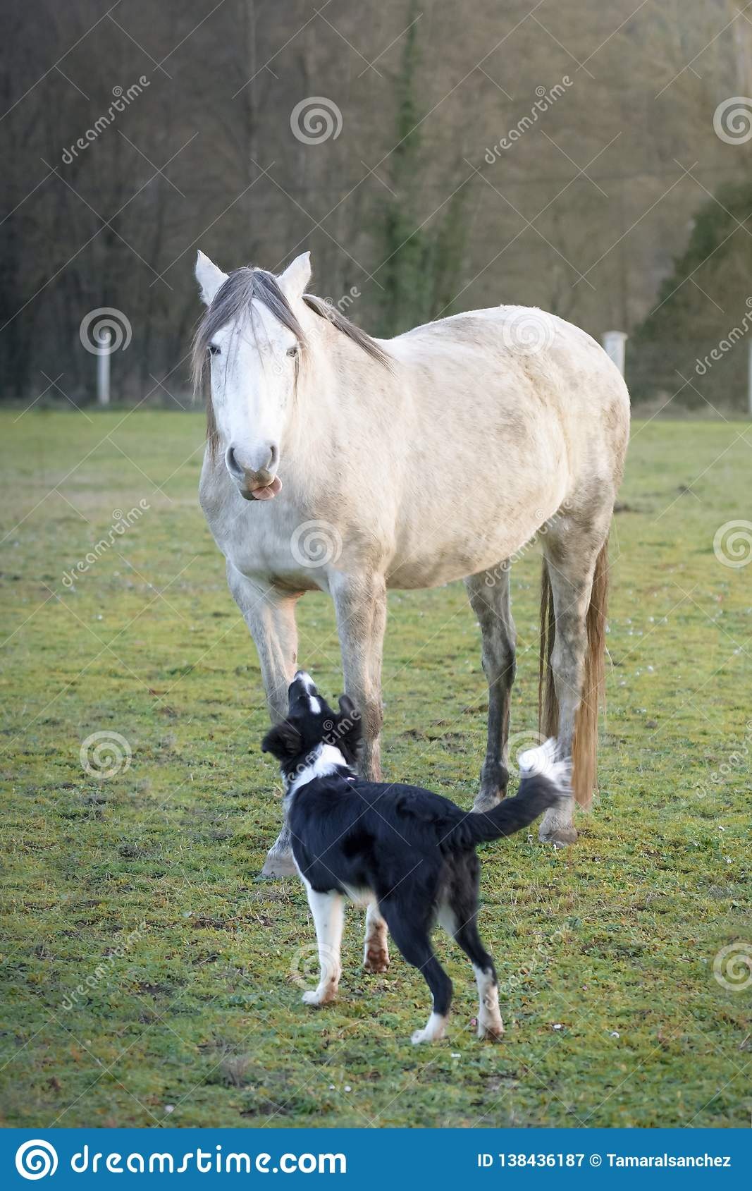 312 Hilarious Horse Photos Free Royalty Free Stock Photos From Dreamstime