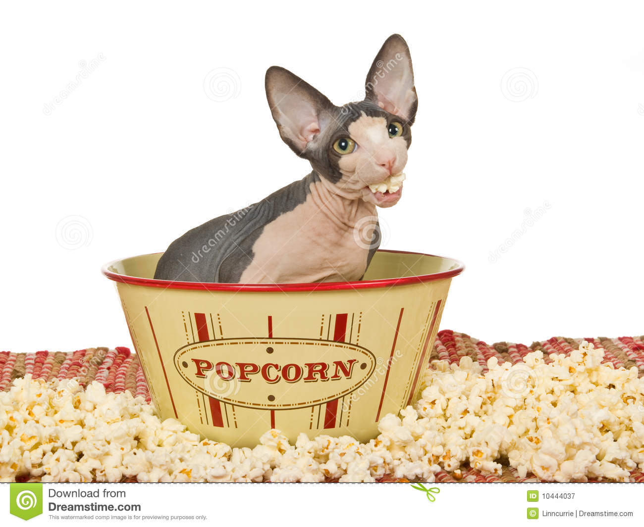 White Cat Corn Popcorn