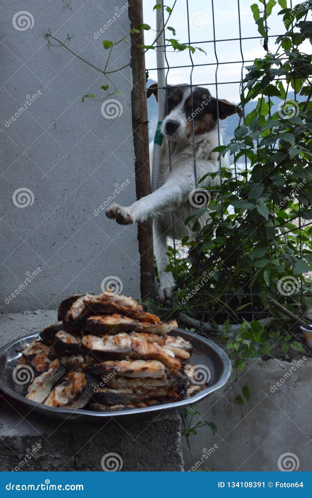 Hungry stray dog wants food
