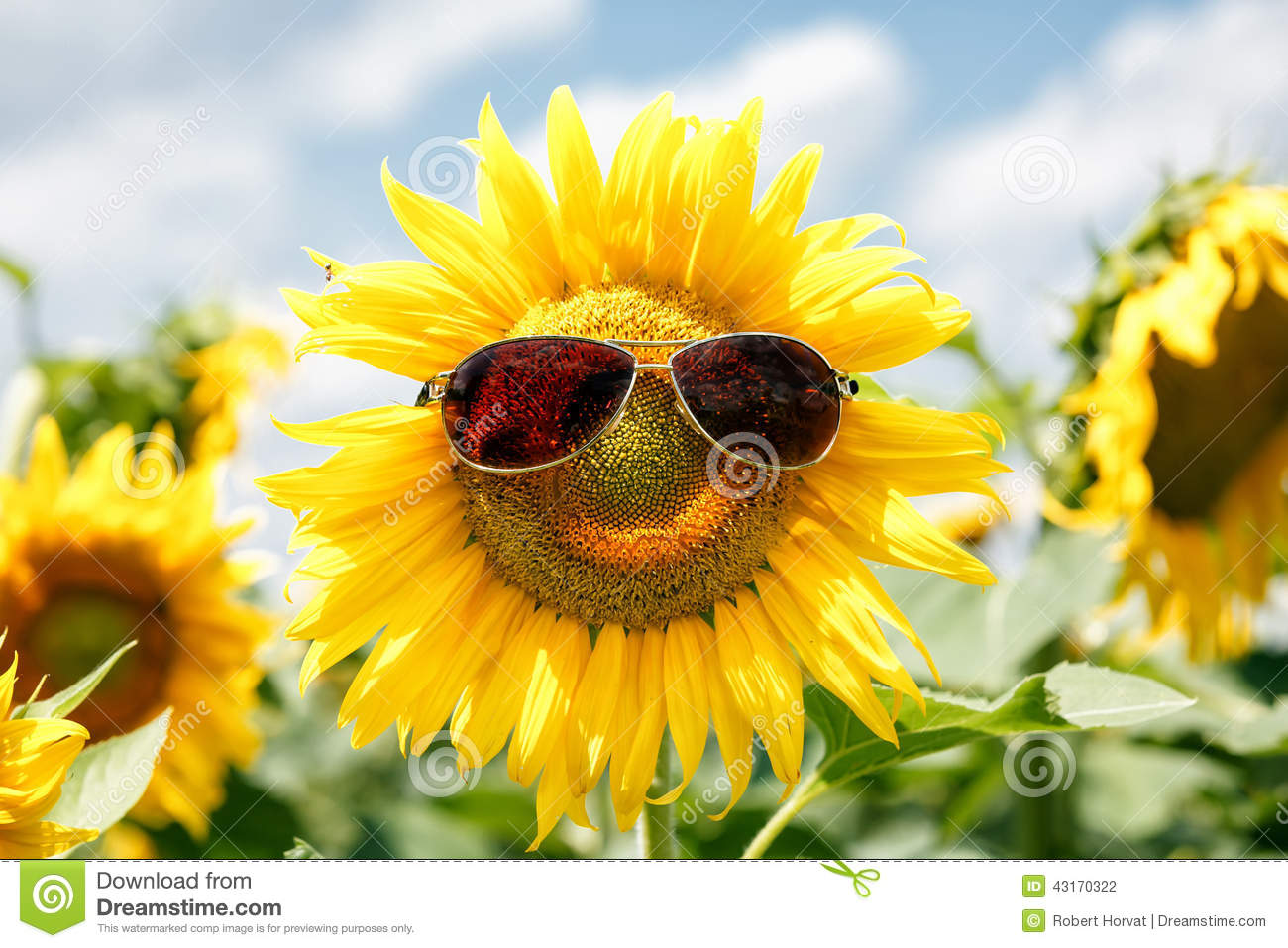 Closeup of funny face created by putting sunglasses on a sunflower in ... Woman Face White Background